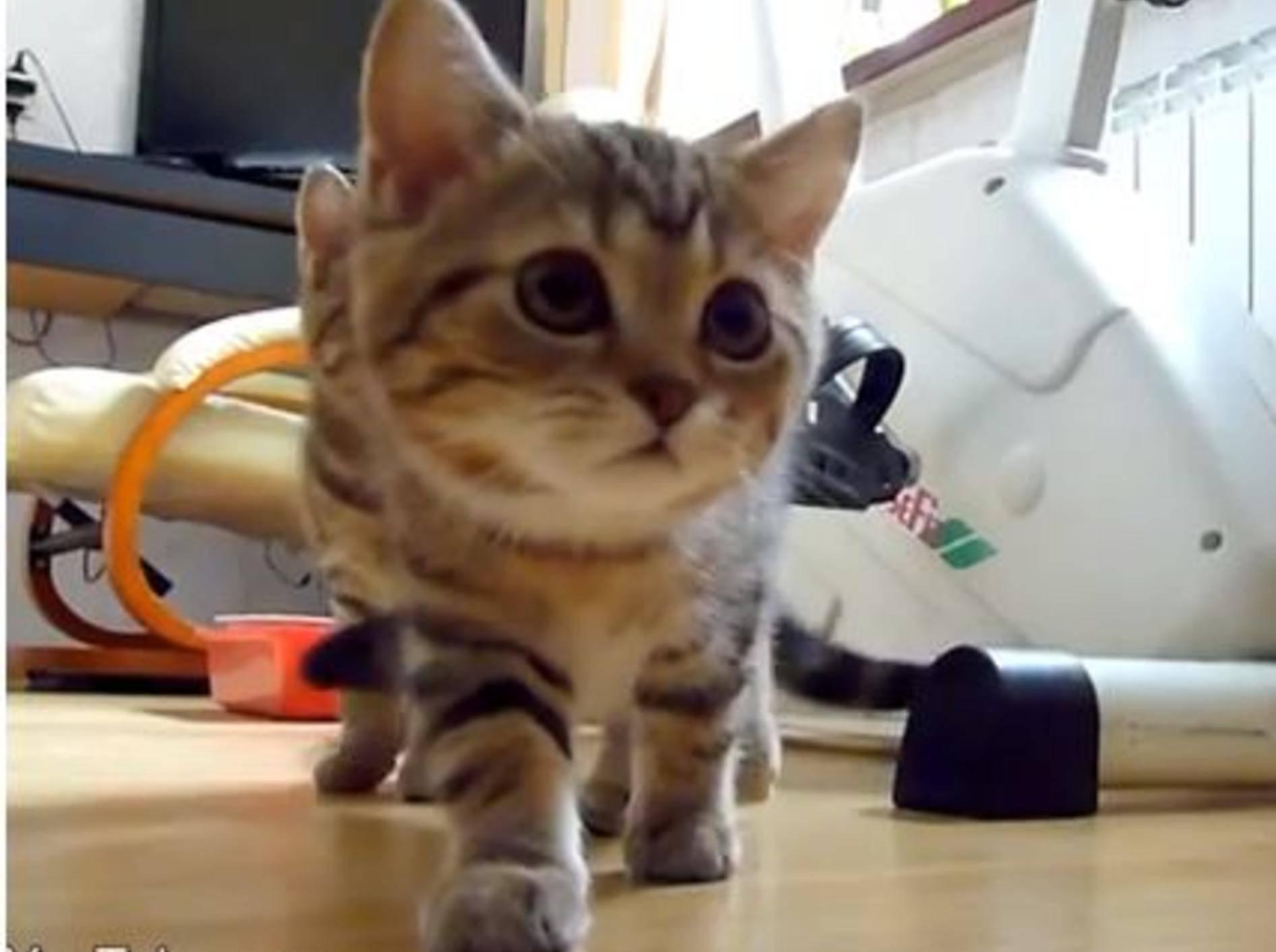 Kinotauglich: Drei Katzen auf geheimnisvoller Mission — Bild: Youtube / Funnycatsandnicefish