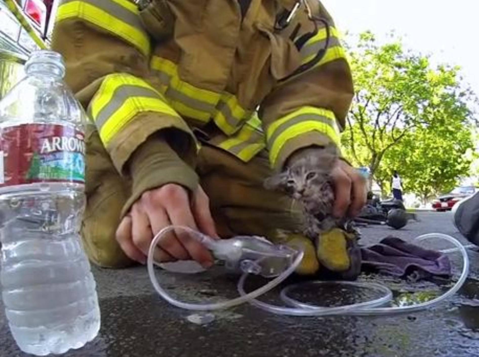 Wahrer Held: Feuerwehrmann rettet Katzenbaby Lucky — Bild: Youtube / GoProCamera