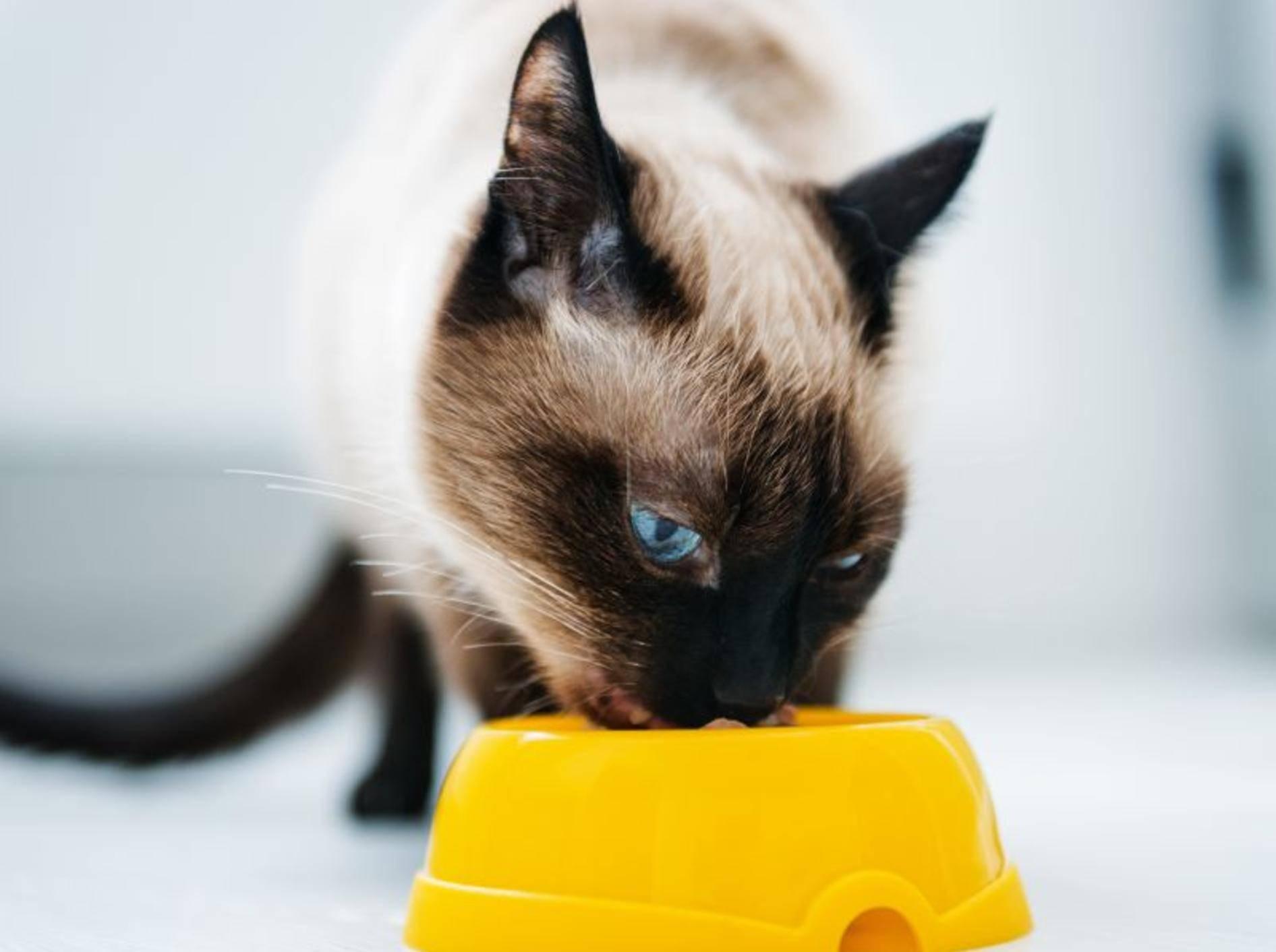 Bio-Futter für Katzen soll nicht nur hochwertig sein sondern auch gut schmecken — Bild: Shutterstock / Valerie Potapova