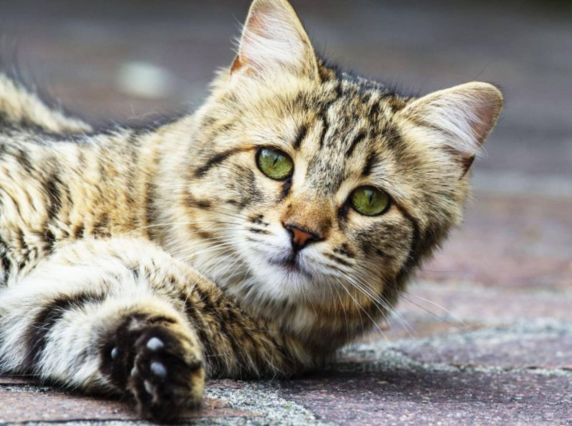 Spezielle Bachblüten für Katzen erhalten Sie Online und beim Tierarzt — Bild: Shutterstock / LEONARDO VITI