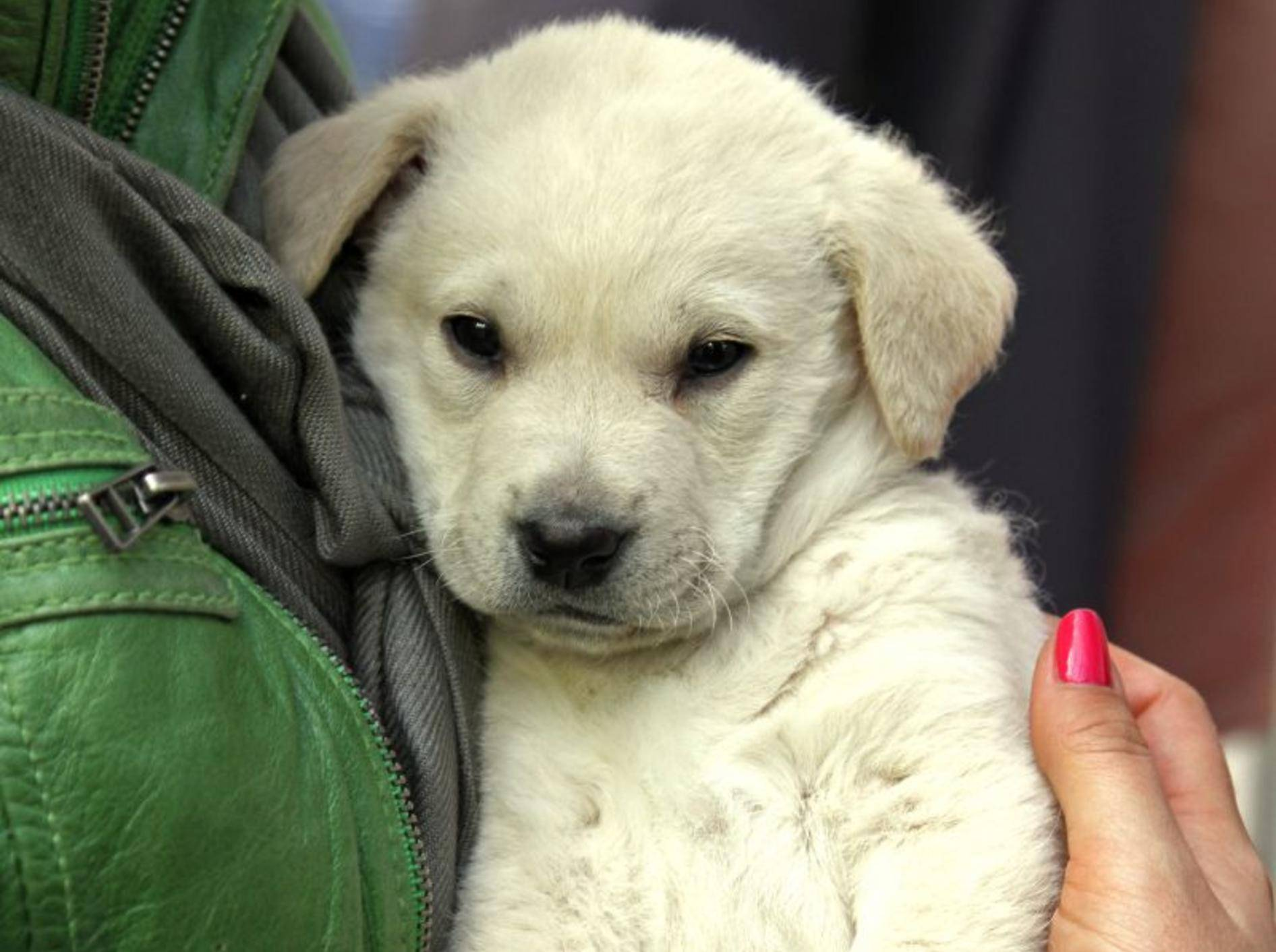 Vor einem aufregenden Tierarztbesuch können Bachblüten helfen — Bild: Shutterstock / Ttatty