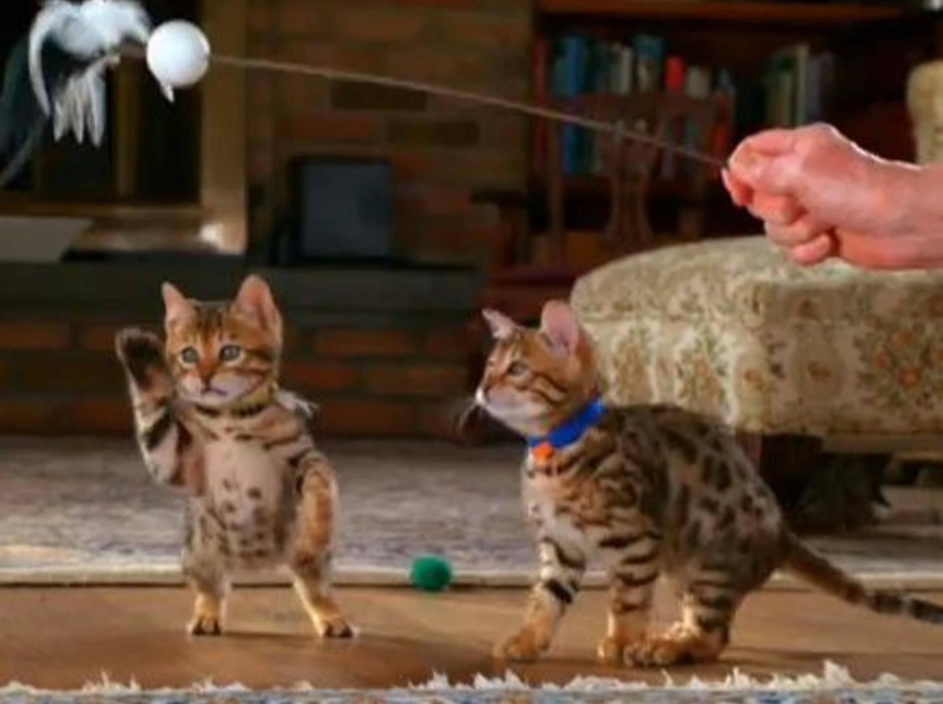 Immer wieder schön: Katzen in Slow Motion — Bild: Youtube / Animal Planet