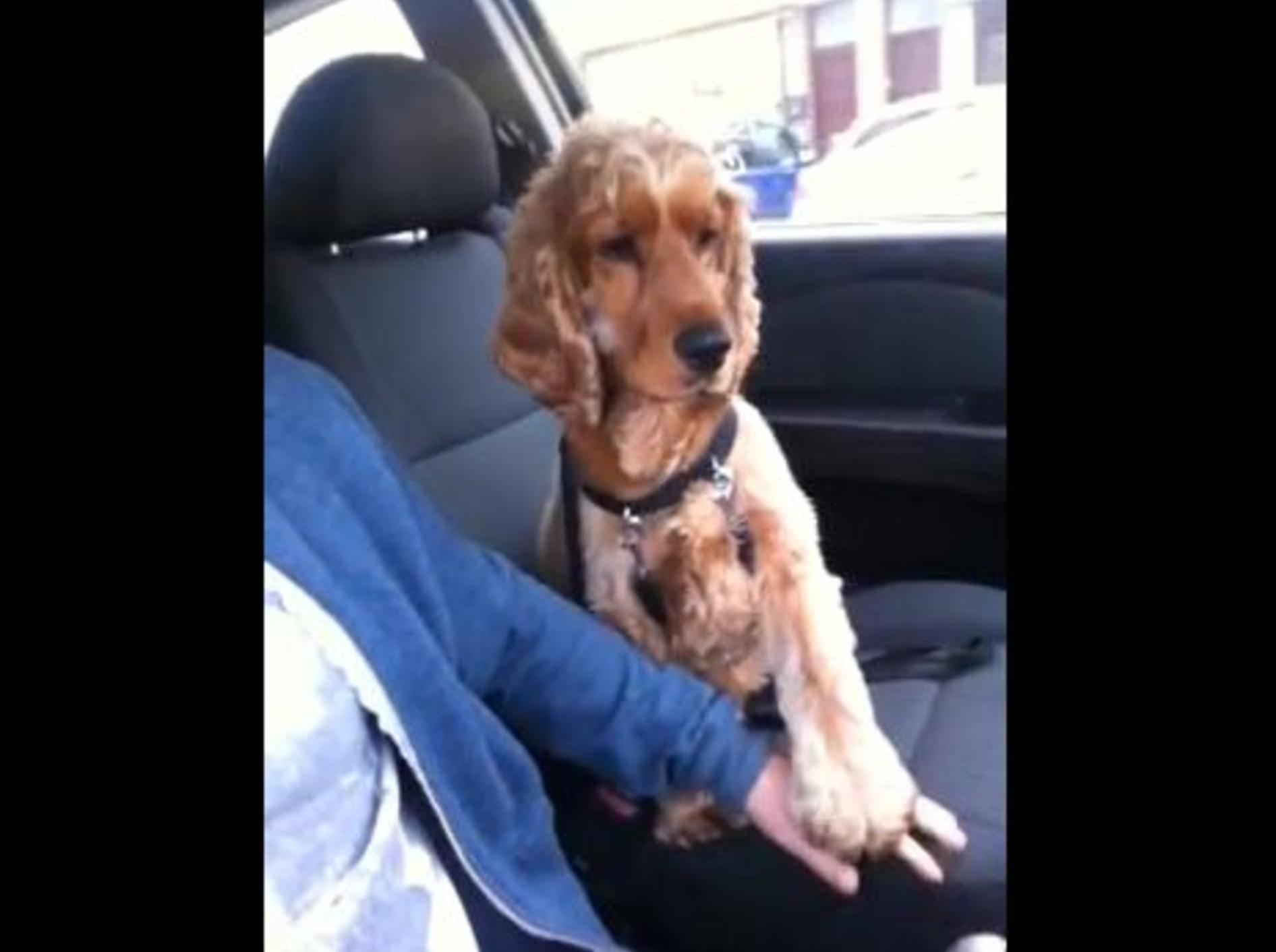 Hund Tommy hält Pfötchen beim Autofahren — Bild: Youtube / Adam Douglas·