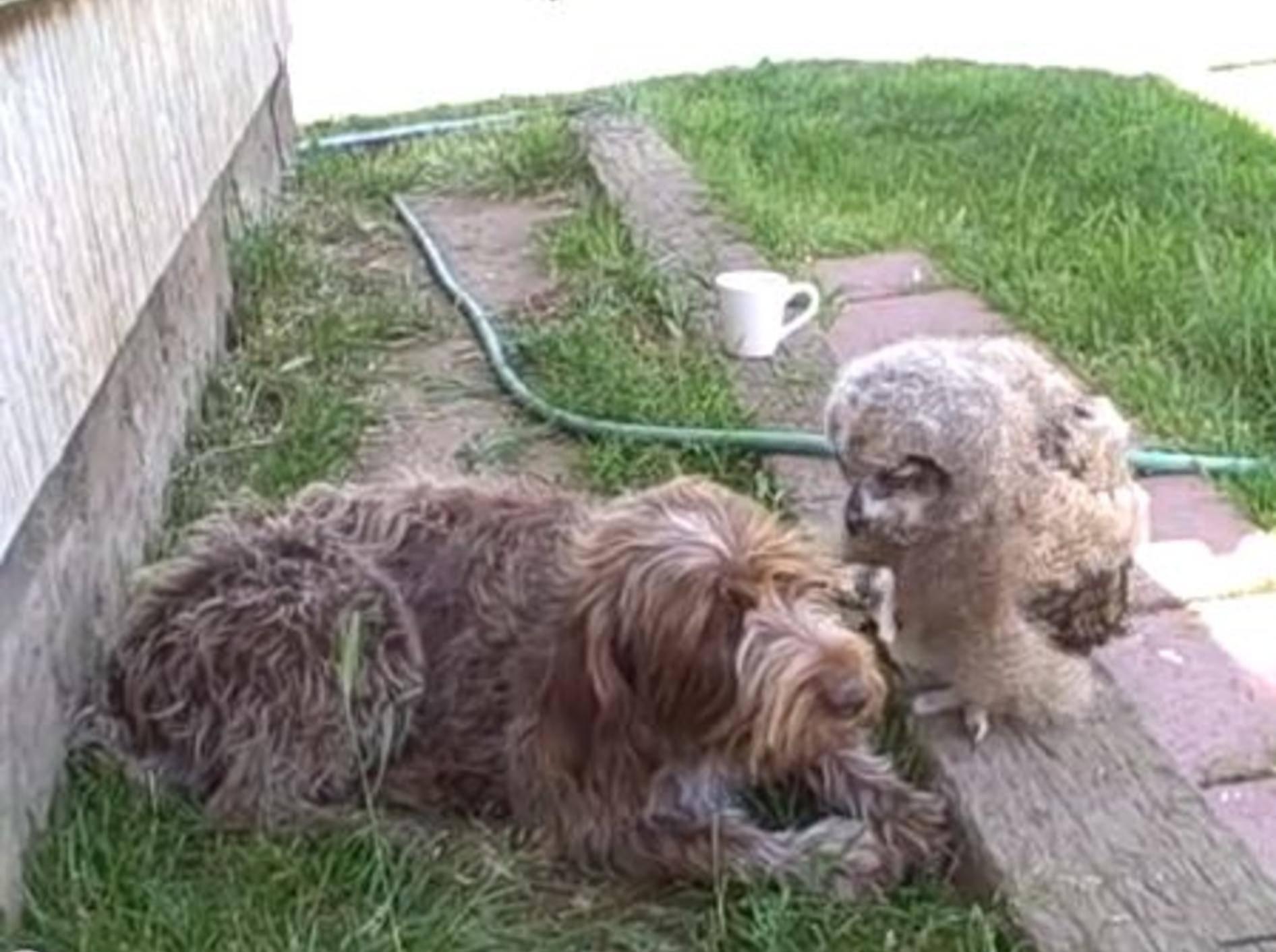 Süßer Hund stellt seinen gefiederten Freund vor — Bild: Youtube / signiblue