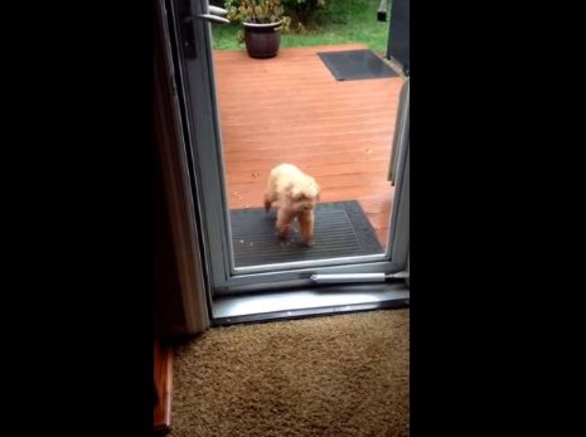 Liebevoller Hund hält seinem Kumpel die Tür auf — Bild: Youtube / Maureen Gilronan