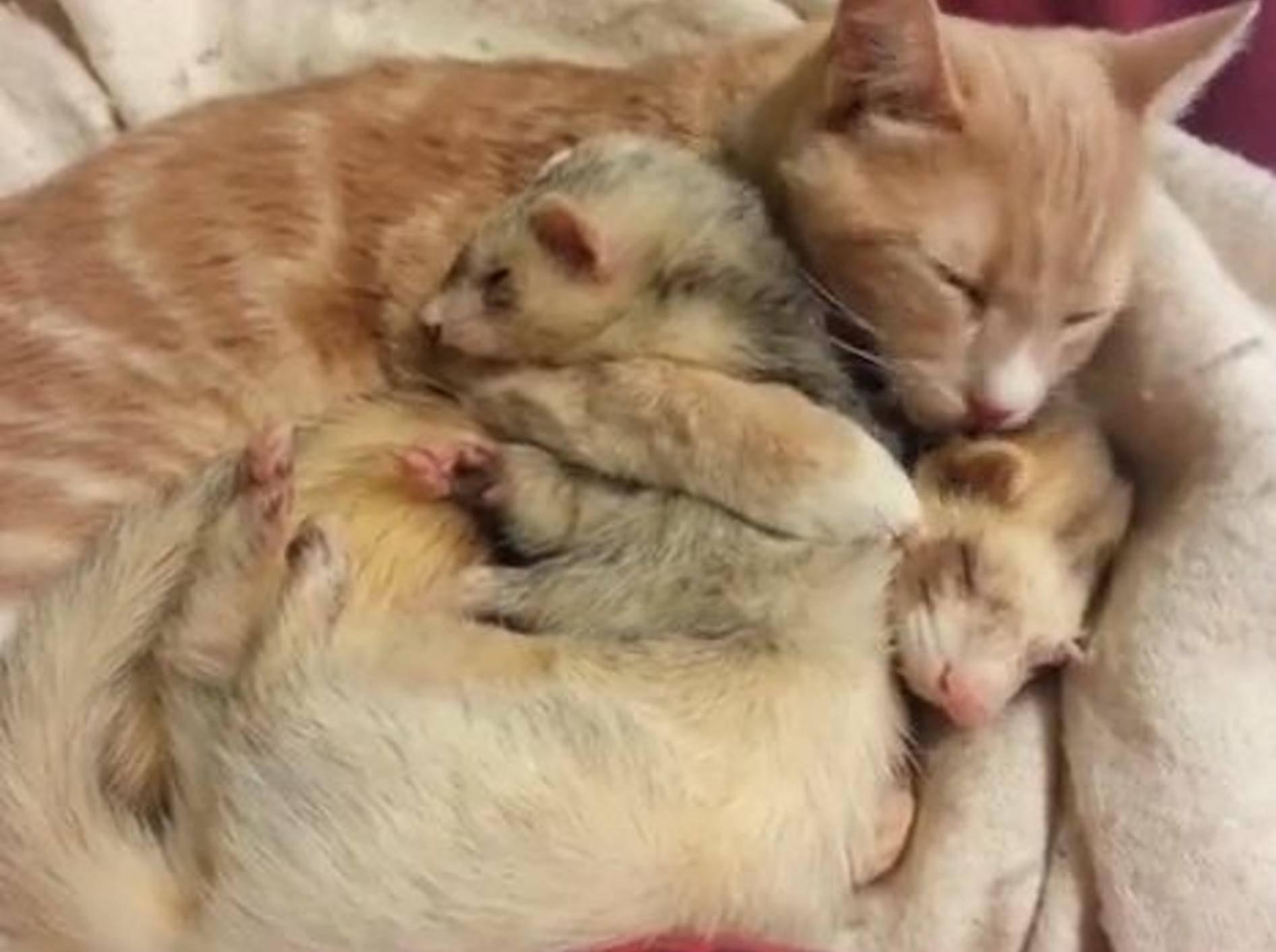 Wie süß: Drei Kuschelfreunde lassen es sich gut gehen — Bild: Youtube / mallinds