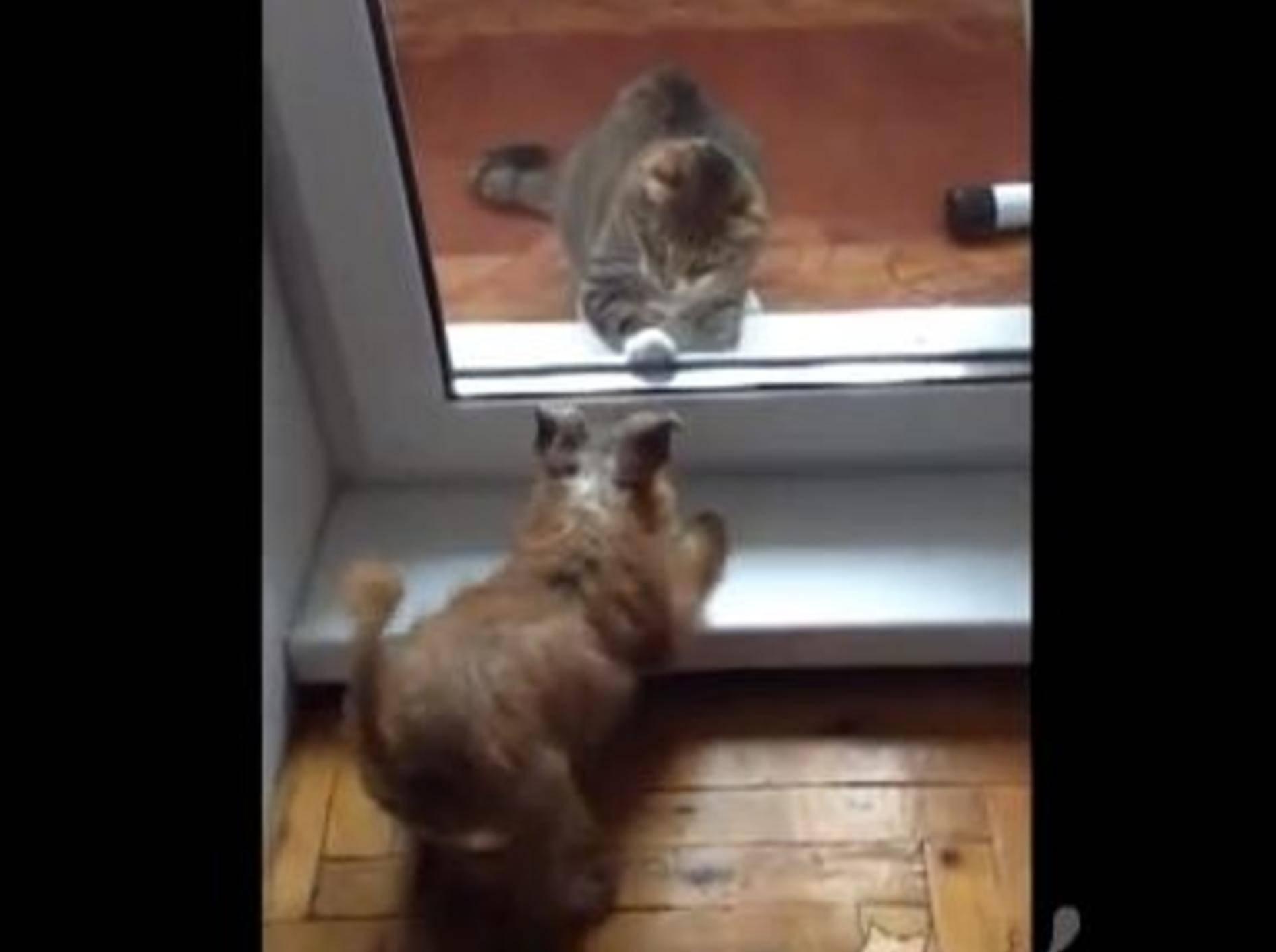 Katze-Hund-Glastuer