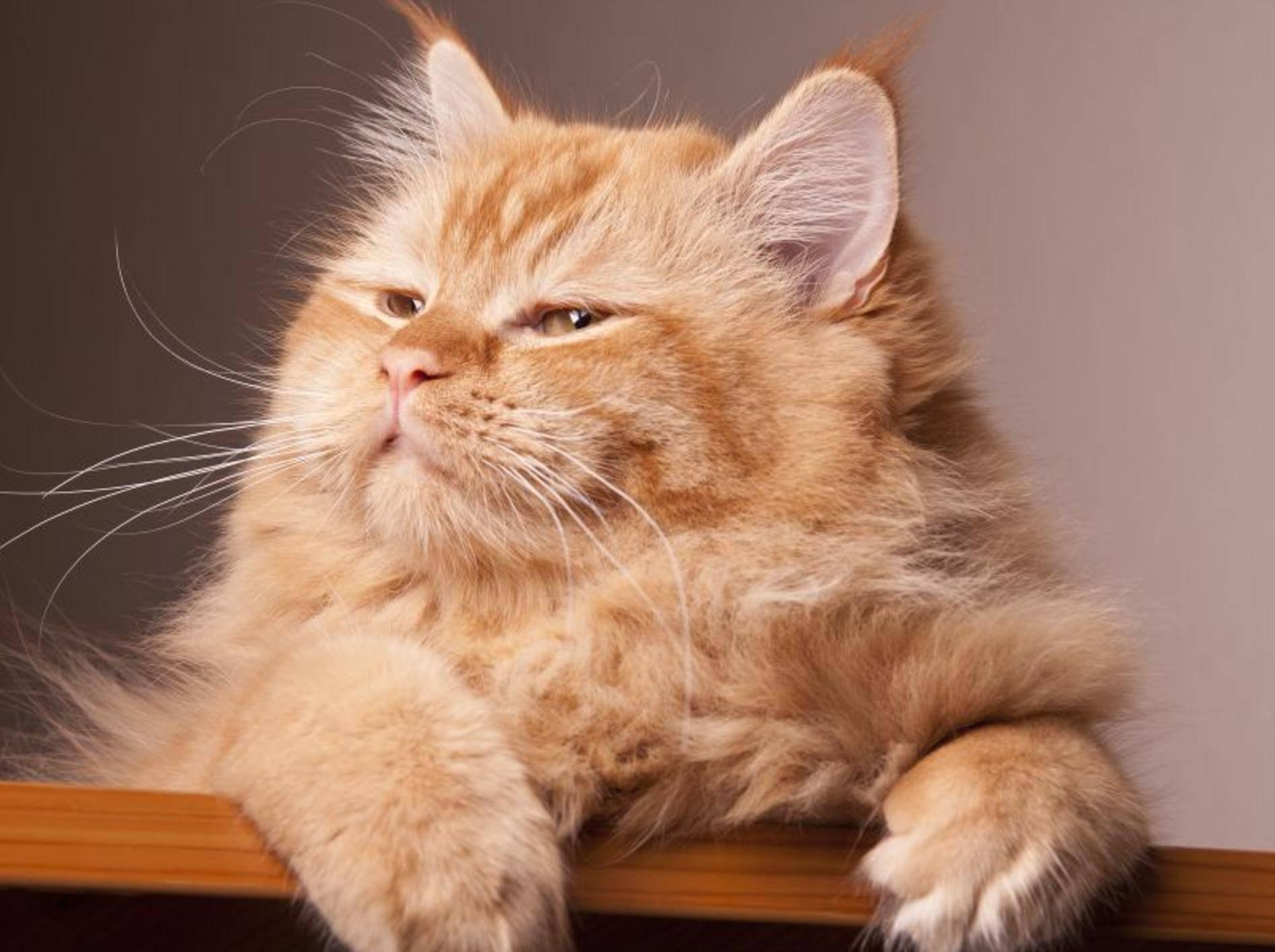 Futterautomaten für Katzen: Diese Modelle gibt es — Bild: Shutterstock / fotomanX