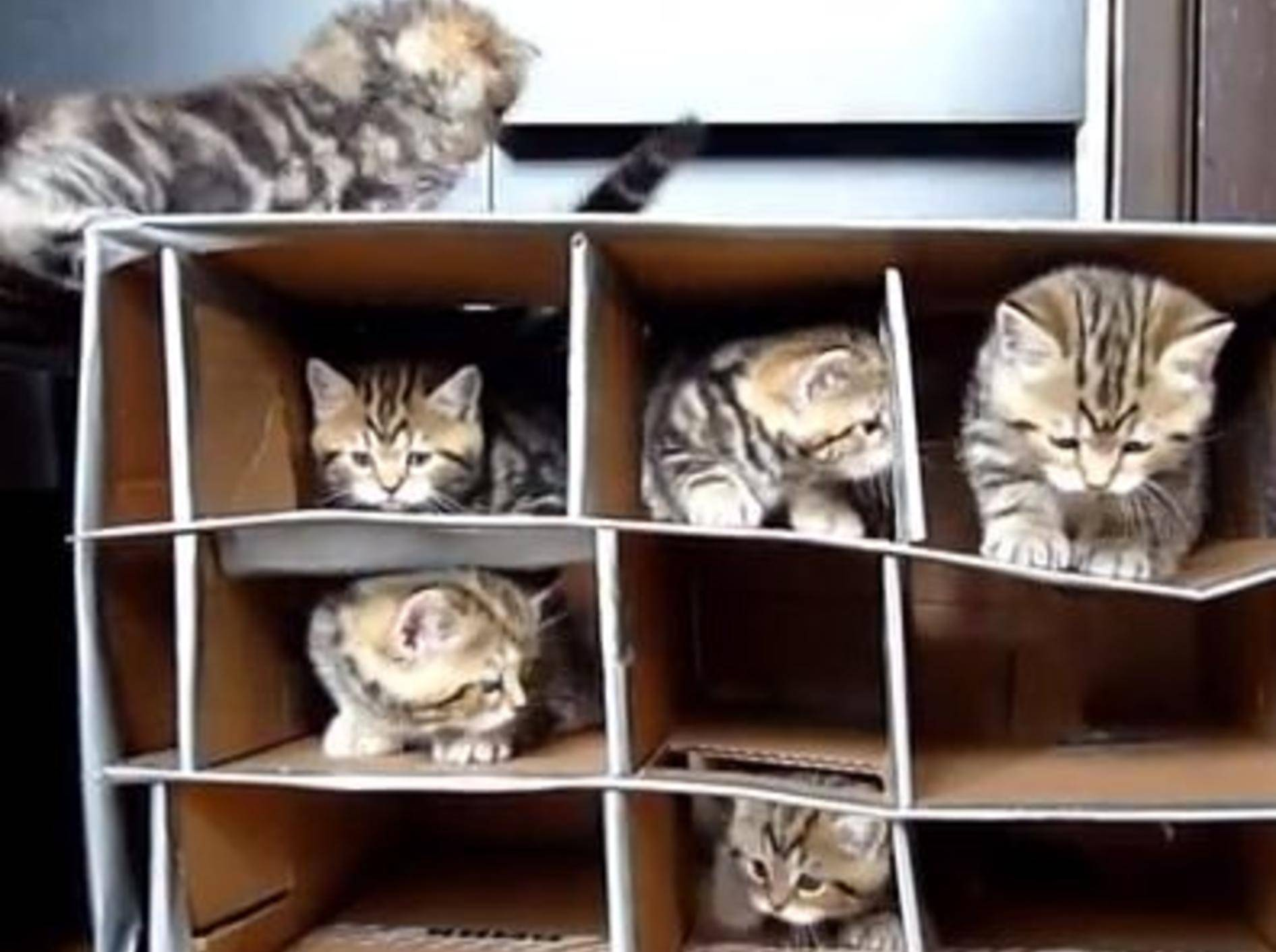 Ganz leicht: Katzenspielzeug selber machen — Bild: Youtube / Funnycatsandnicefish