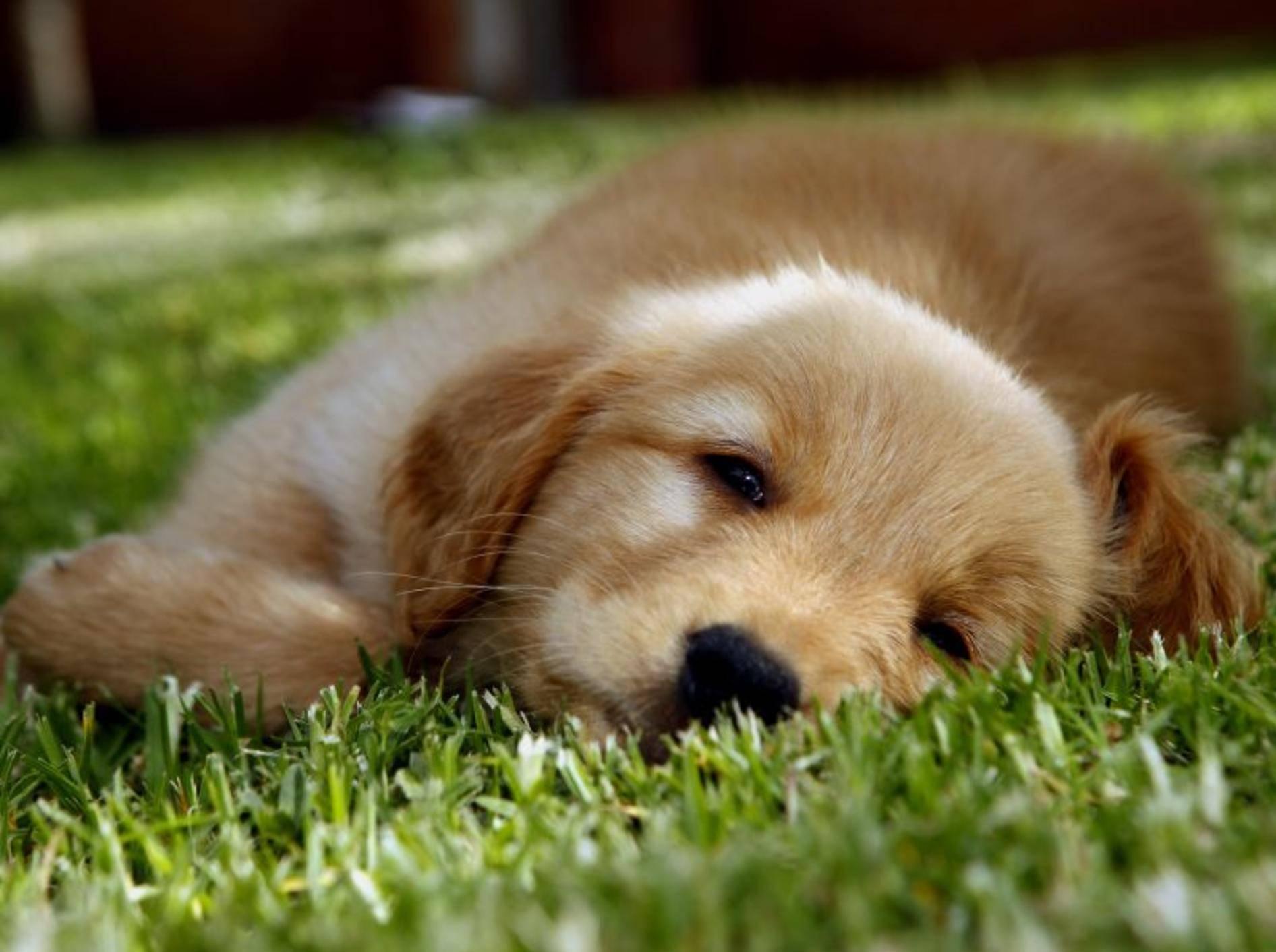 Erste Hilfe für Hunde: Ausrüstung für Notfälle — Bild: Shutterstock / Cristobal Garciaferro