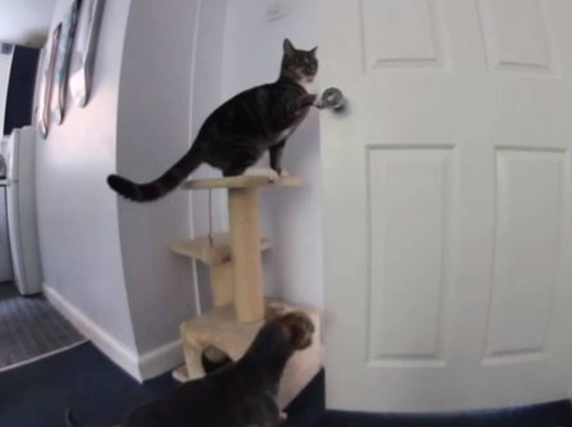 Teamwork: Katze und Hund öffnen die Küchentür - Bild: Youutube / MattHirst