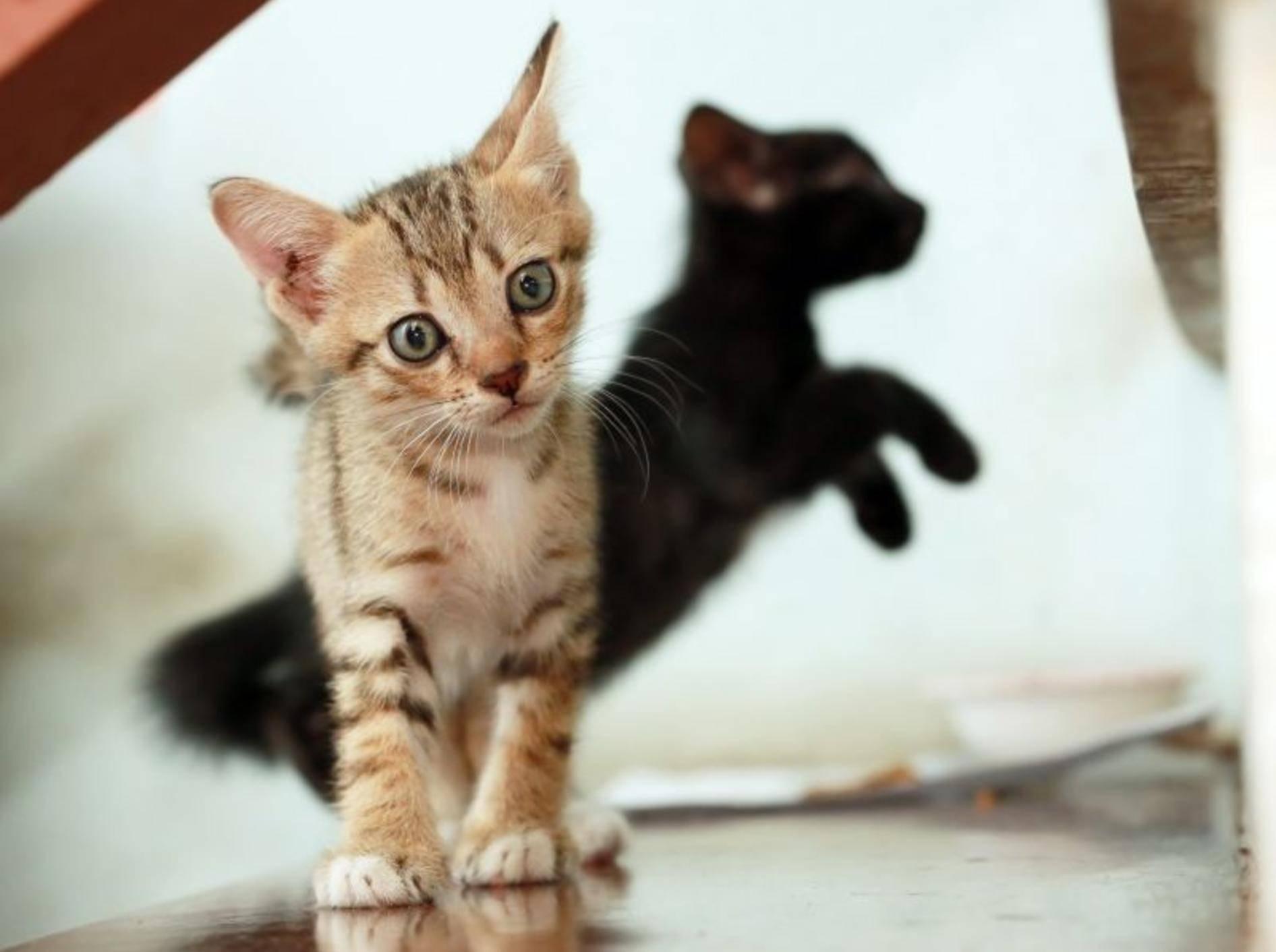 Auf der Mauer, auf der Lauer ... Wenn dieses Katzenbaby gleich loslegt, gibt's kein halten! — Bild: Shutterstock / PCHT