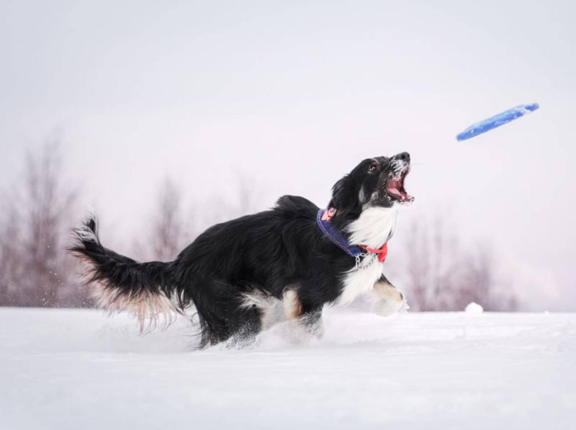 Frisbee spielen bei Schnee und Eis: Einfach toll! – Bild: Shutterstock / Anna Tyurina