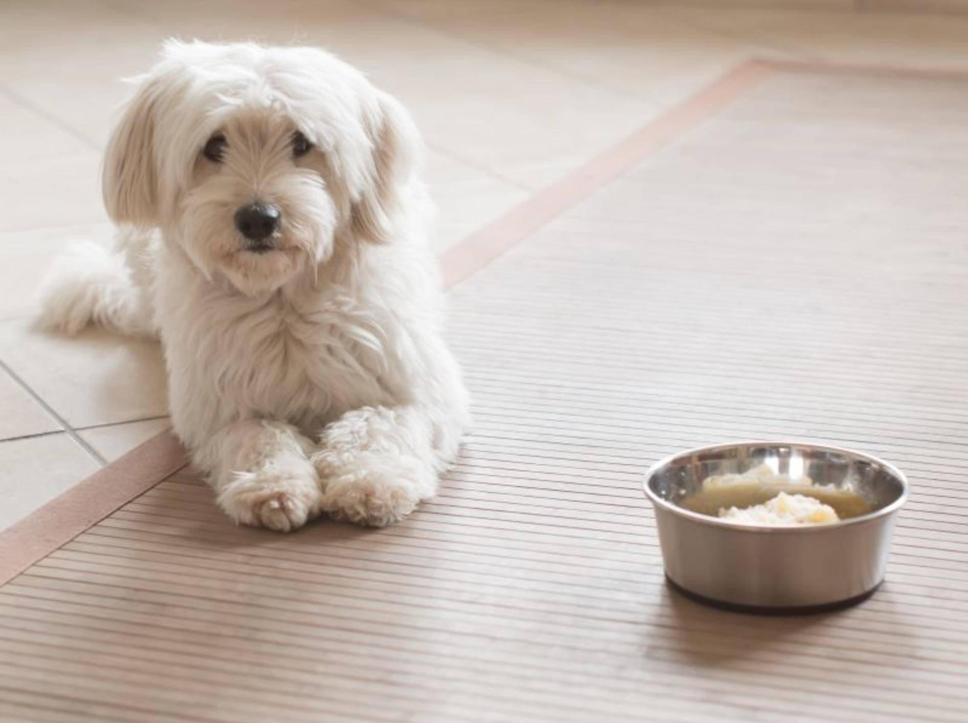 Schonkost für Hunde selber kochen: Reis, Kartoffeln und Hühnchen eignen sich für die Zubereitung — Bild: Shutterstock / Cryber