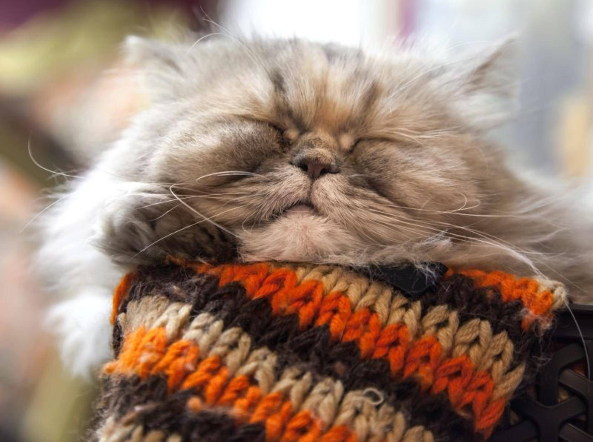 Vier Nahrungsergänzungsmittel für schönes Katzenfell — Bild: Shutterstock / Eugene Sergeev