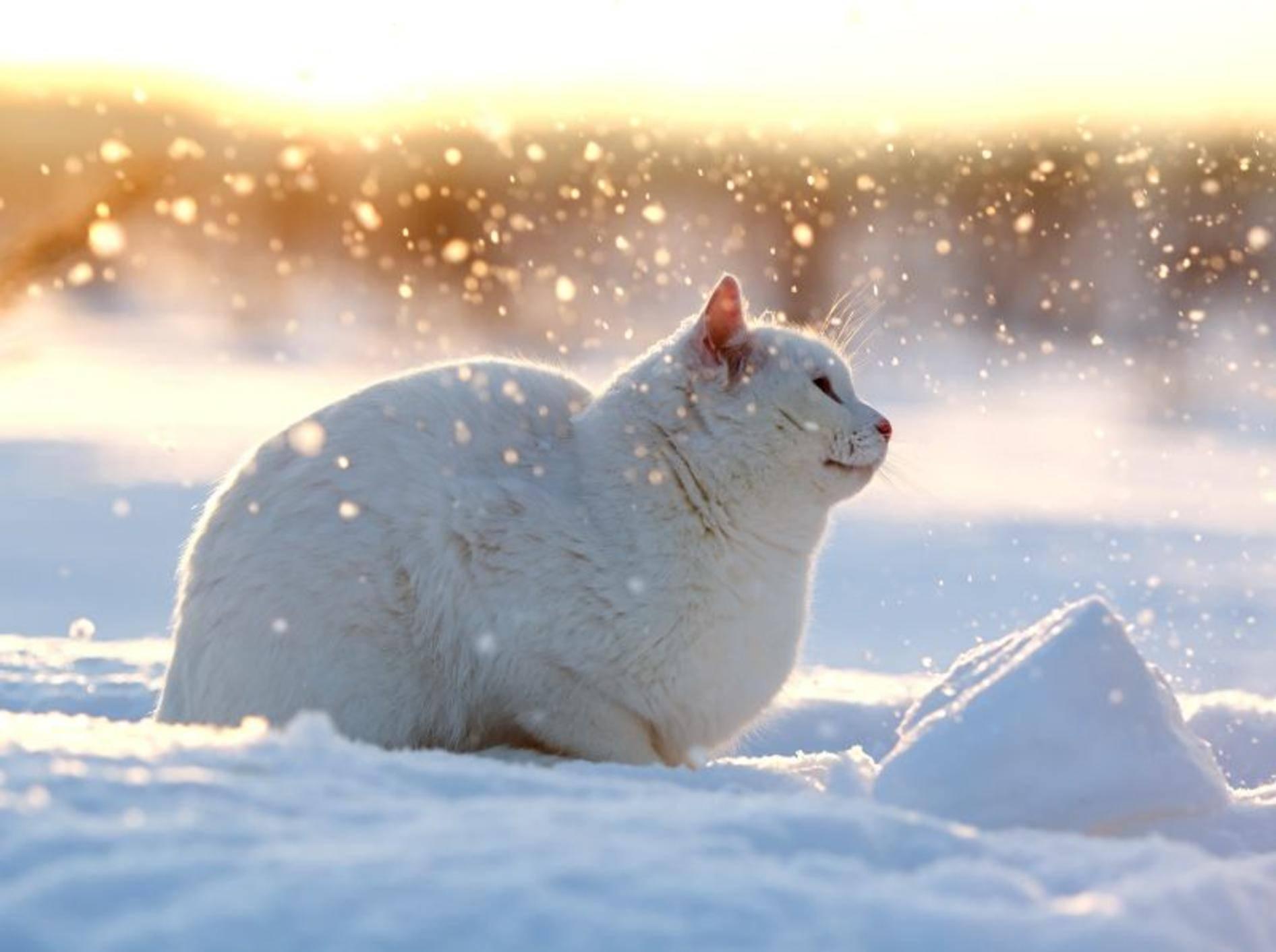Im Schnee liegen und die Sonne genießen, das ist schön! – Bild: Shutterstock / DragoNika