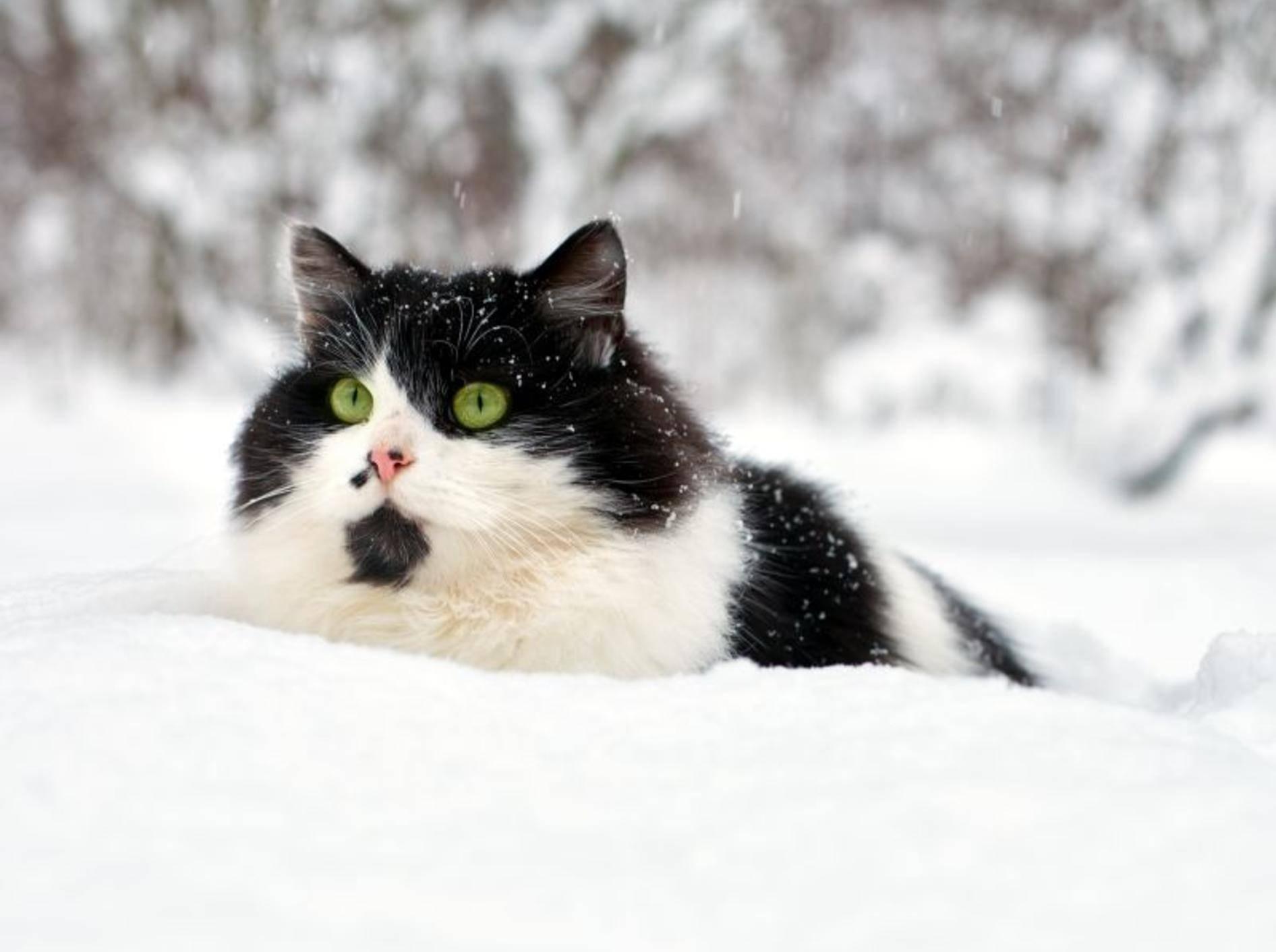 Im Schnee kann man Nachbars Hund am besten auflauern – Bild: Shutterstock / vvvita