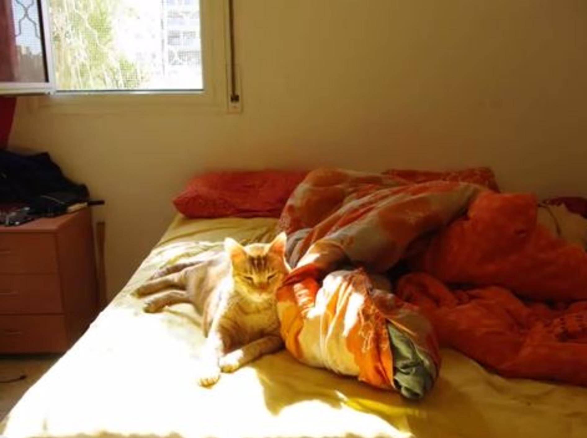 Drei Sonnenstunden mit einer gemütlichen Katze — Bild: Youtube / Anton Nosovitsky