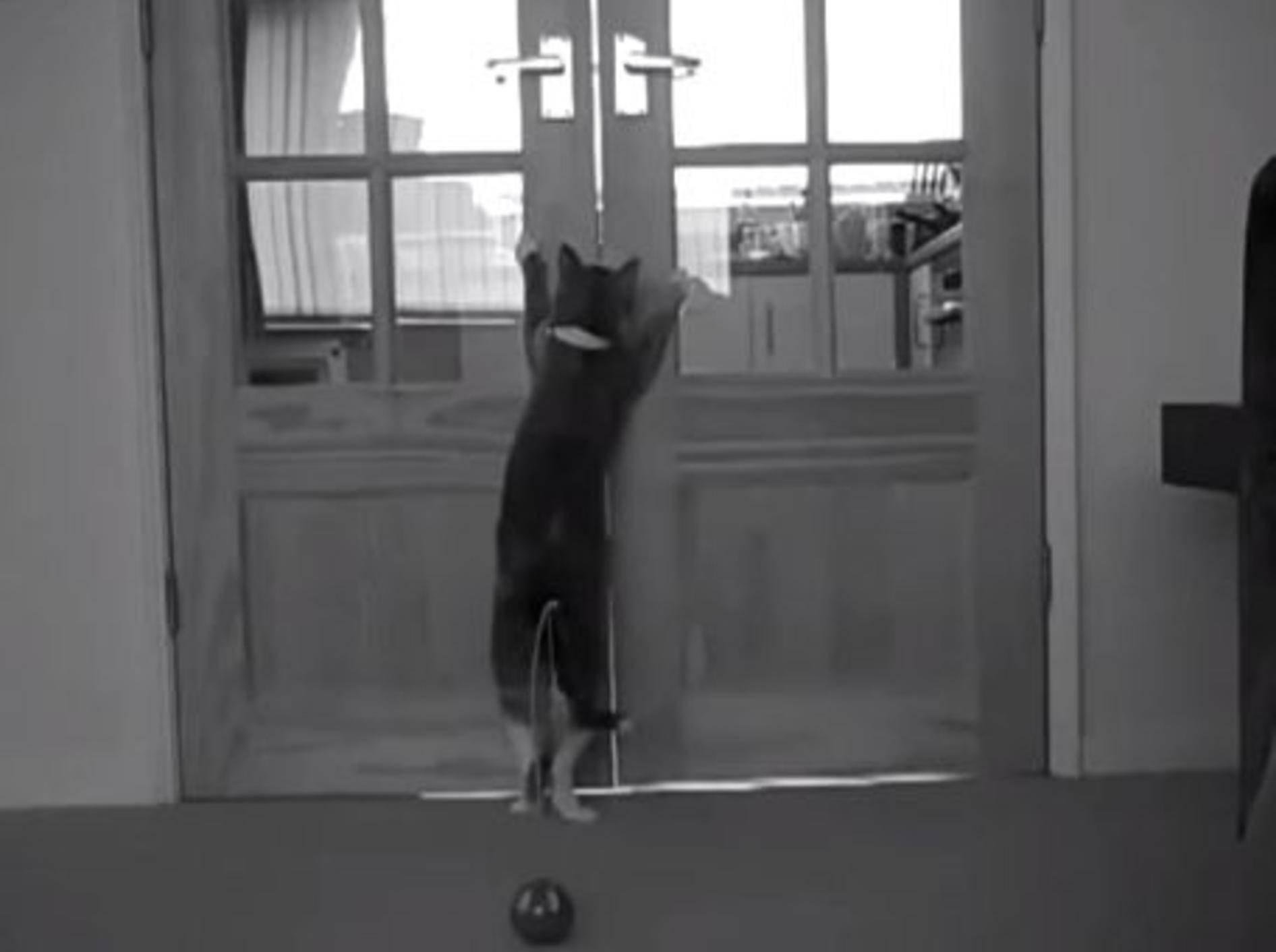 Lustiger kleiner Katzenstreich — Bild:Youtube / linz457·