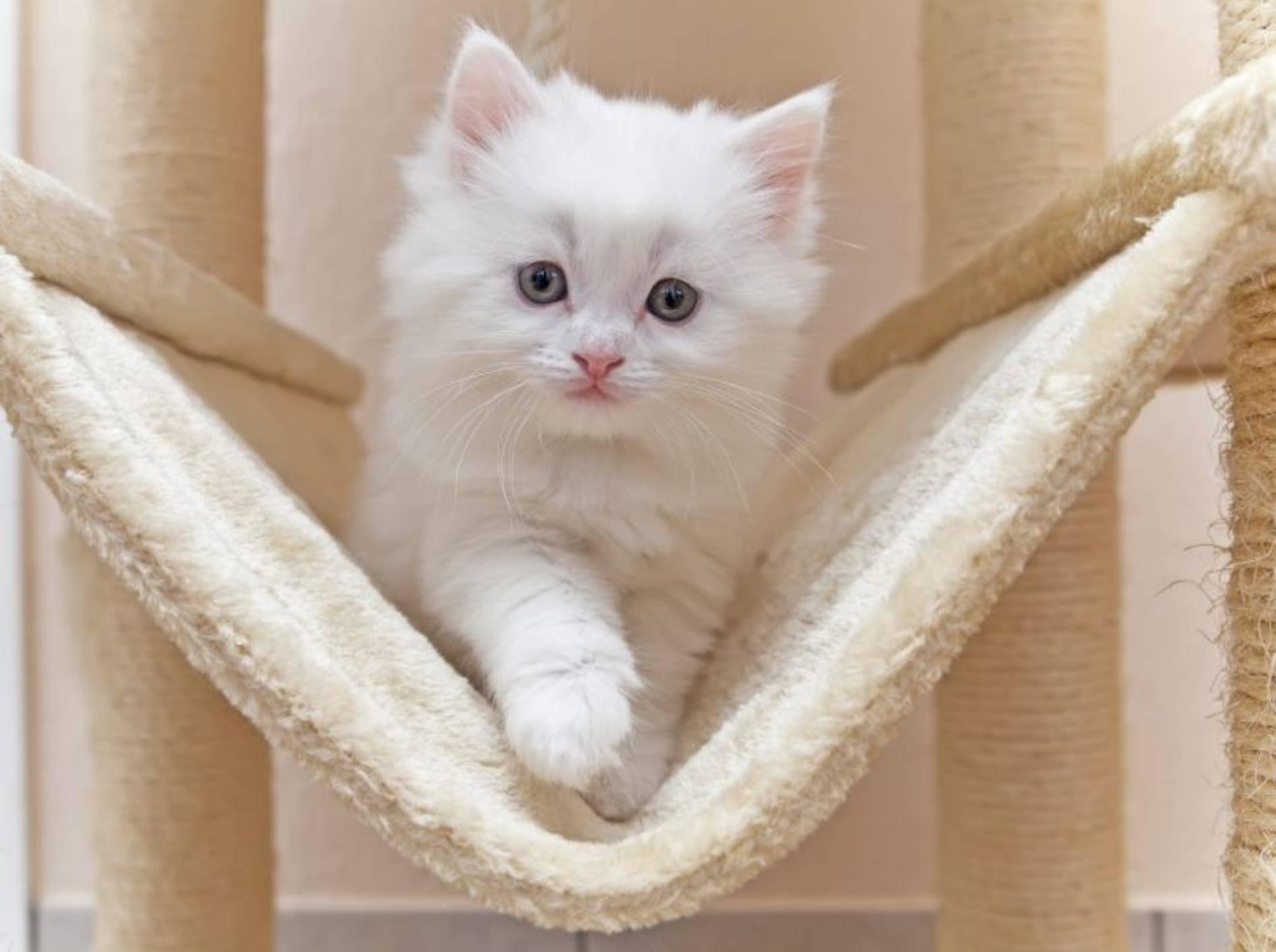 Katzenspielzeug für gute Laune und gegen Wintermüdigkeit — Bild: Shutterstock / Gena96