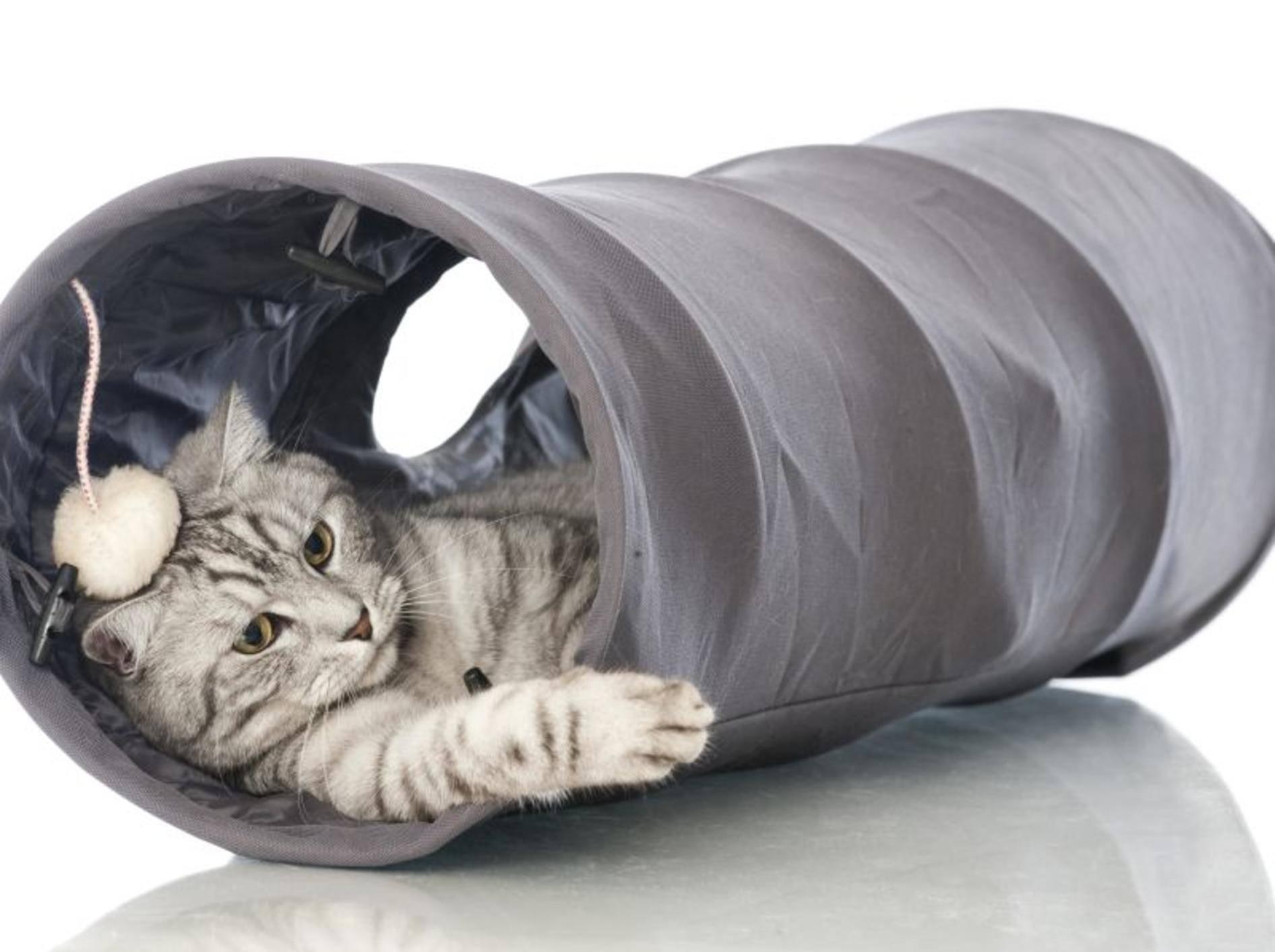 Zum Spielen und Verstecken: Die schönsten Katzentunnel — Bild: Shutterstock / Dora Zett