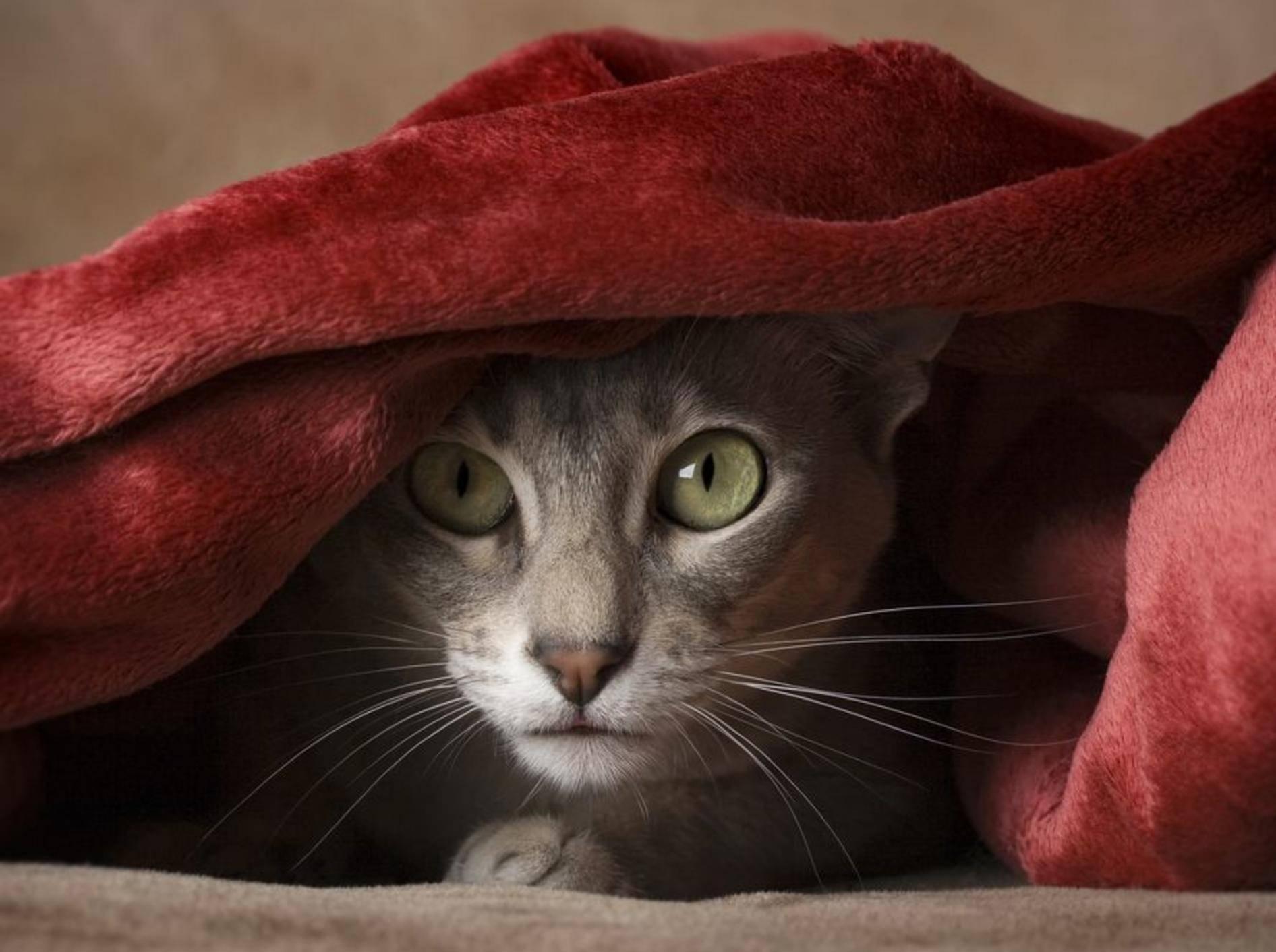 Ruhe und Routine sind wichtig, um der Katze an Silvester Stress zu ersparen – Bild: Shutterstock / Sharon Alexander