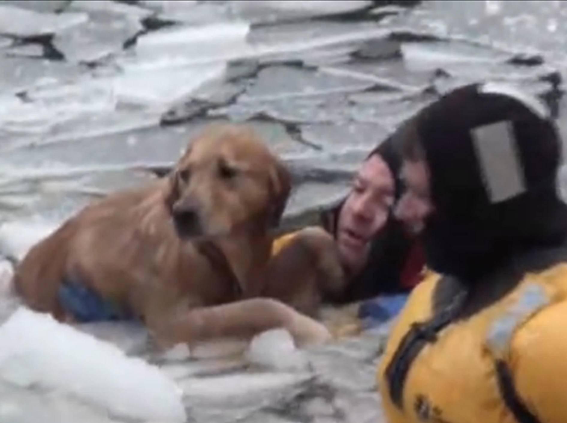 Feuerwehr rettet Golden Retriever aus eisigem Wasser – Bild: Youtube / AssociatedPress