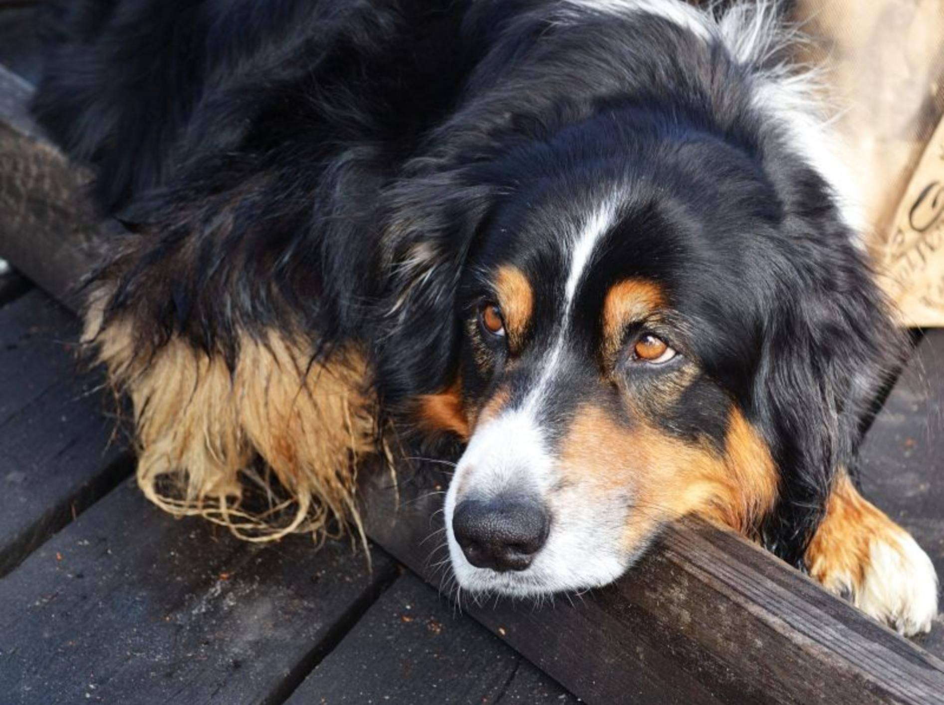 Schonkost Rezepte für Hunde sind leicht verträglich und reich an Nährstoffen – Bild: Shutterstock / Arevik