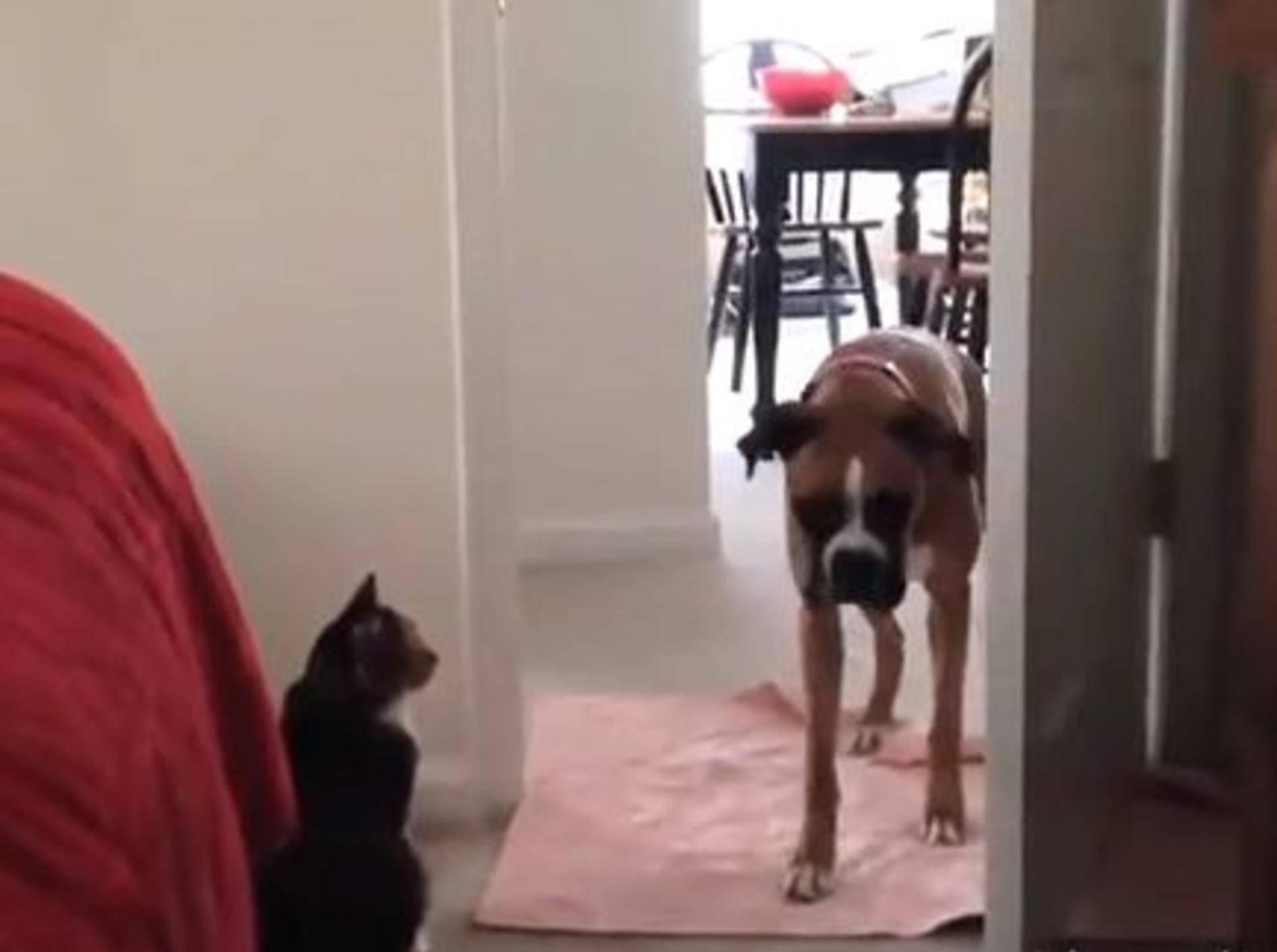 "Katzen vs. Hunde: ""Du kommst hier nicht durch!"" – Bild: Yotube / happymedulla"