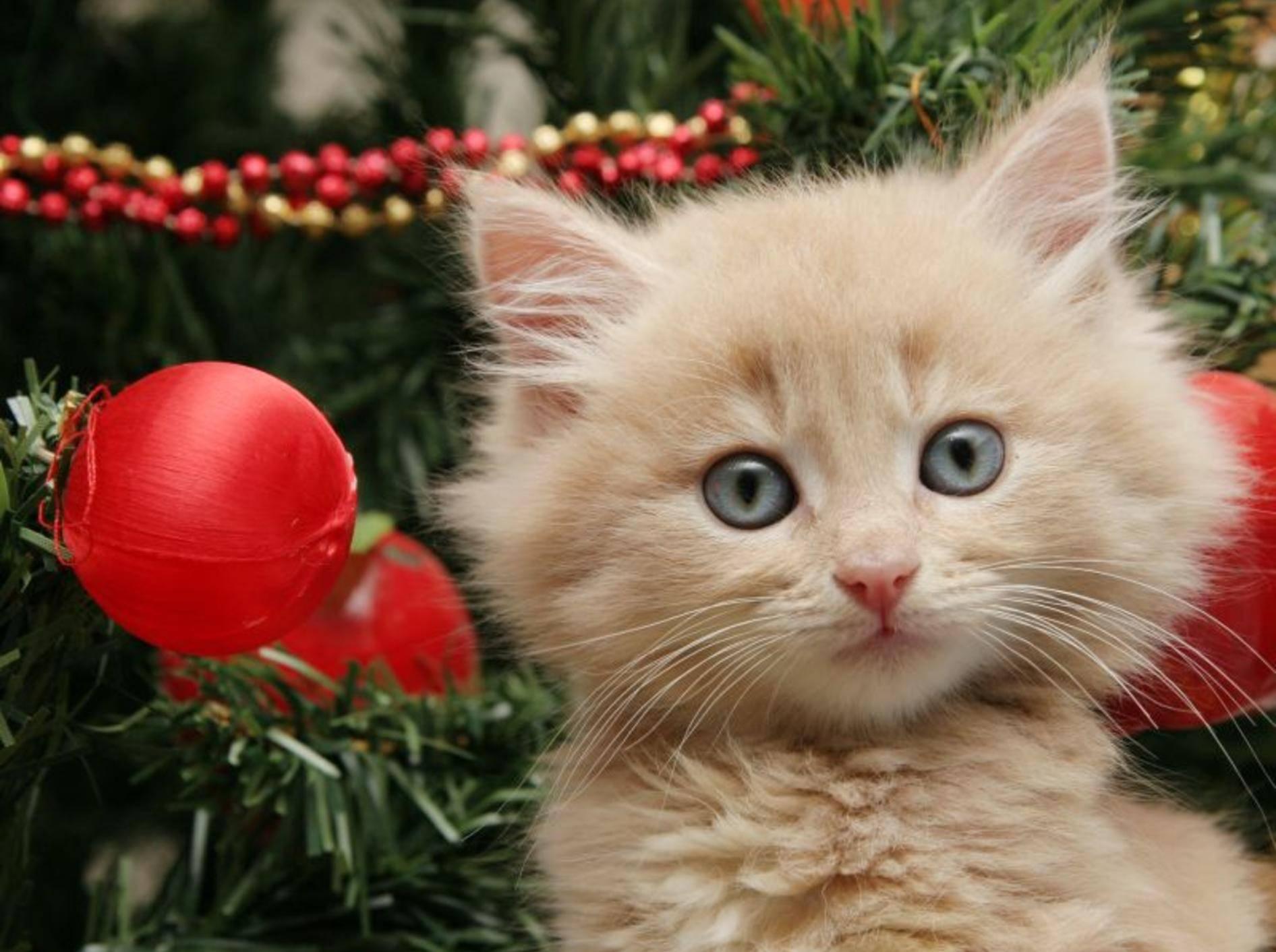Schöne Weihnachtsgeschenke für Katzen – Bild: Shutterstock / Sue McDonald