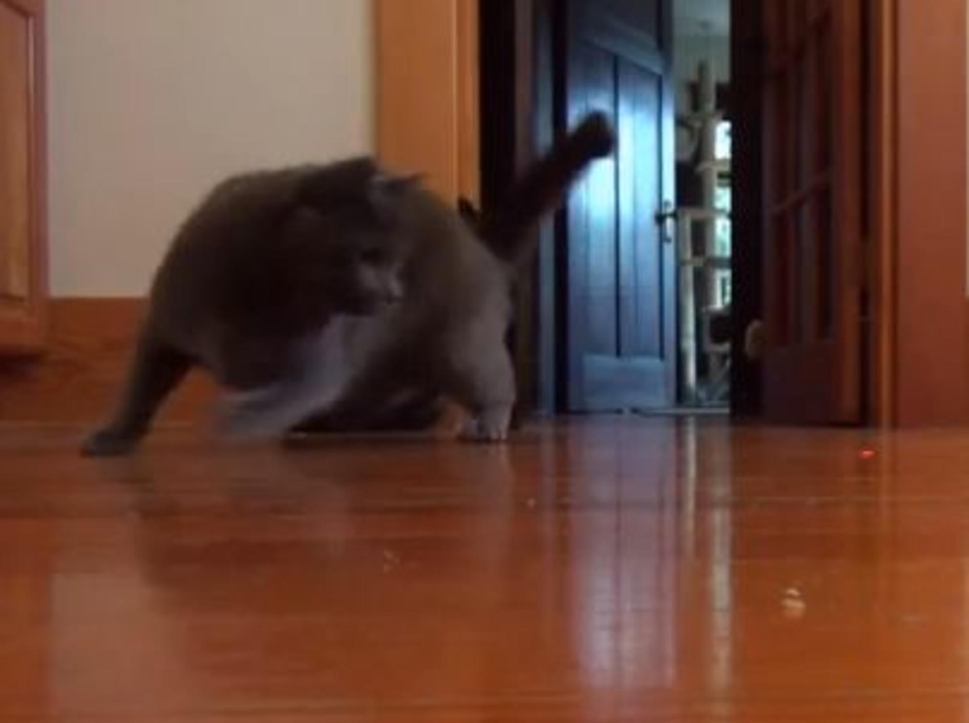 Russisch Blau Katzen, Laserpointer & Musik – Bild: Youtube / DrNworb
