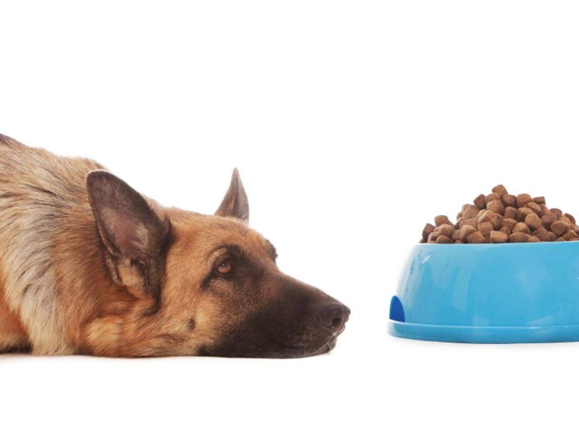 Schonkost für Hunde ist leichter verträglich als herkömmliches Futter – Bild: Shutterstock / Francesco83