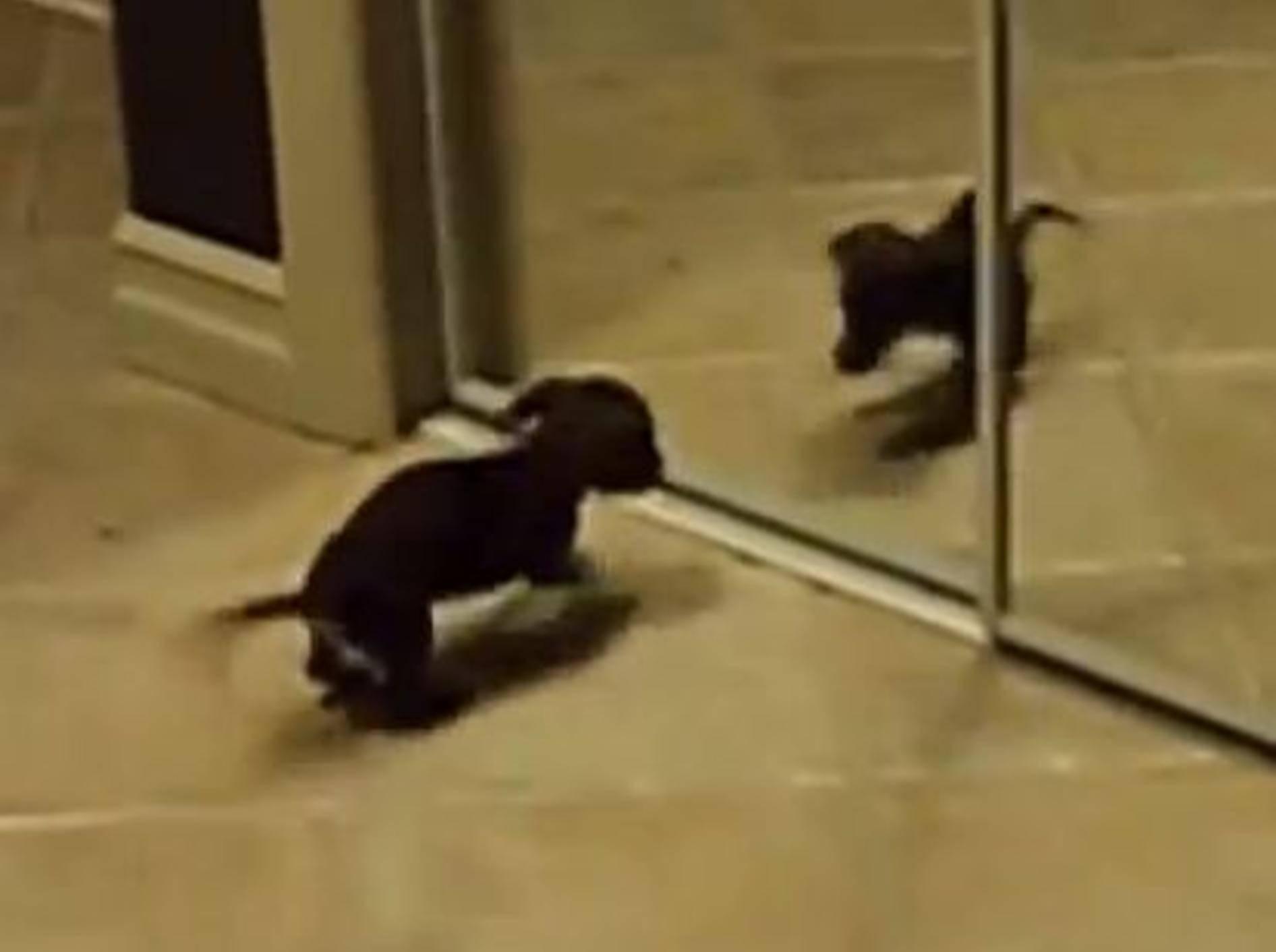 Hunde, Katzen und Spiegel Compilation – Bild: Youtube / Tiger Productions