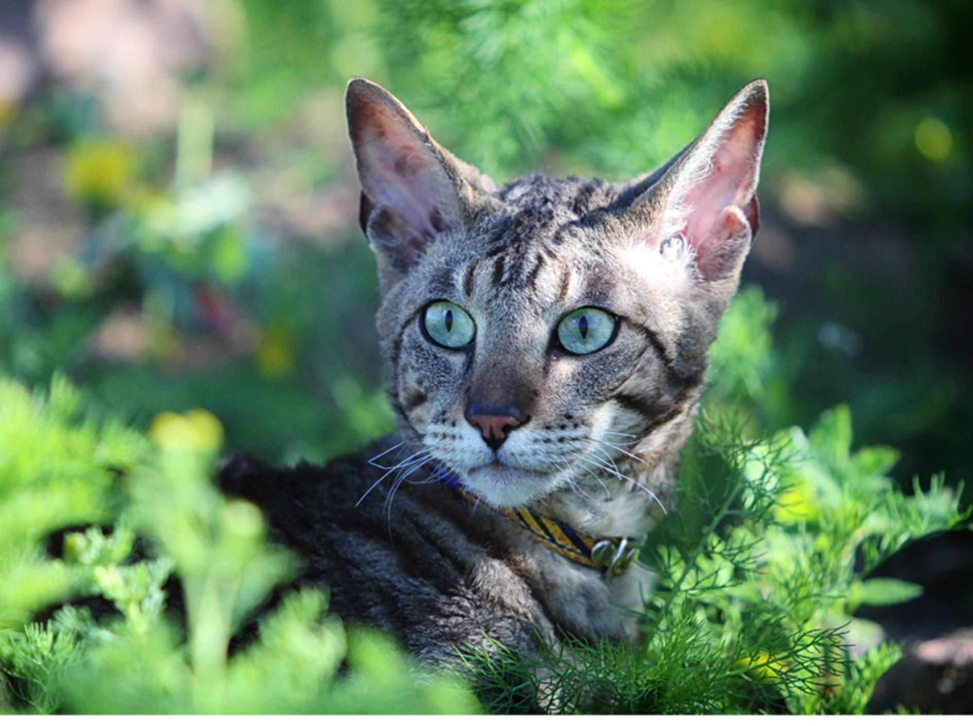 Pflanzen sind meist harmlos - doch einige sind für Katzen giftig - Bilder: Shutterstock / DragoNika