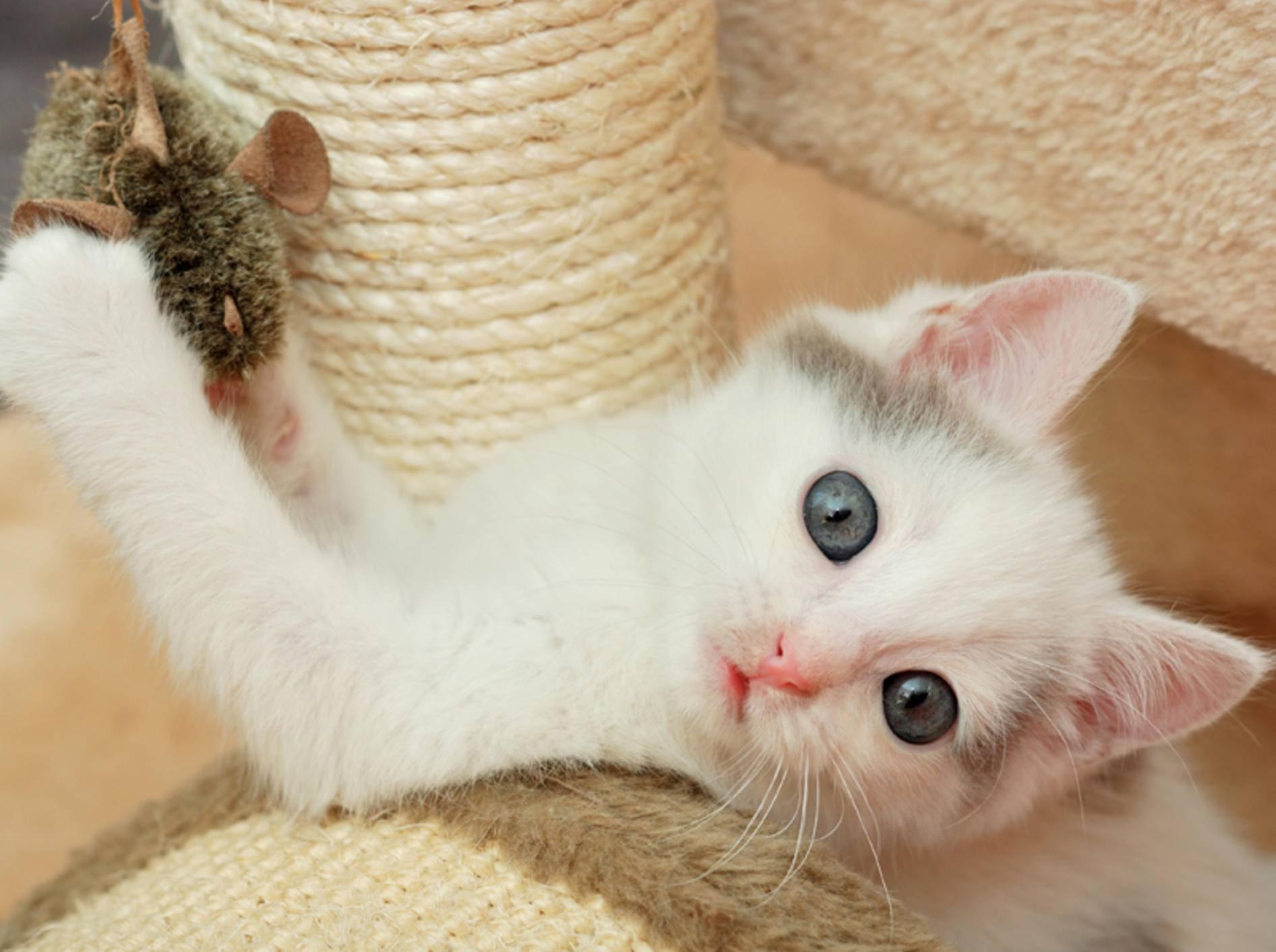 Spaß mit dem Kratzbaum: Für Katzen ein Muss! - Bild: Shutterstock / Nadinelle
