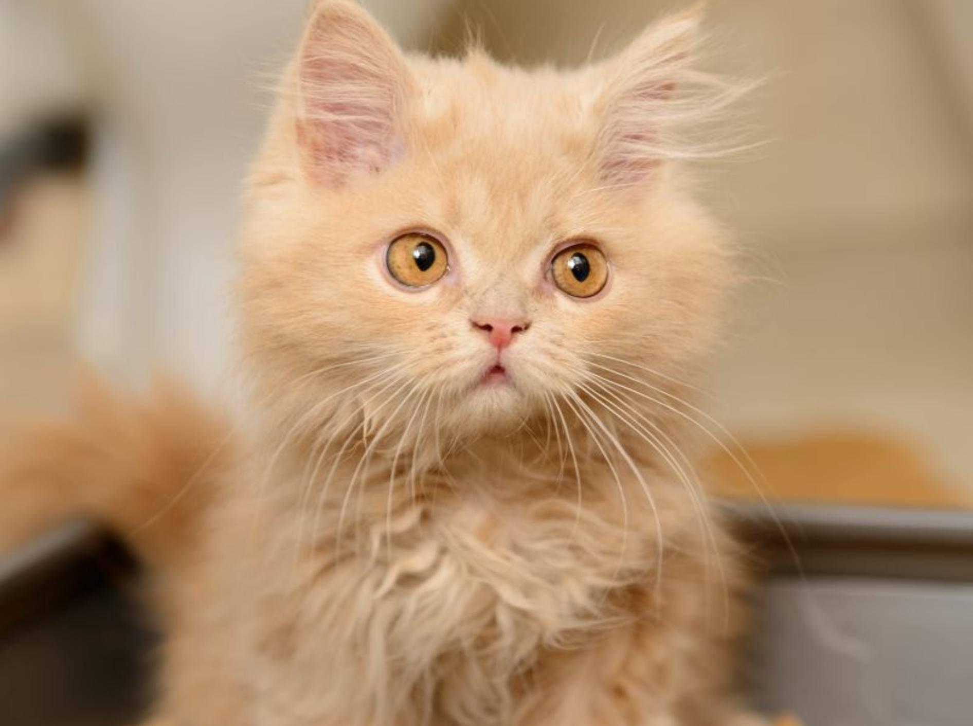 Selbstreinigend, geruchsentfernend und Co.: Moderne Katzenklos – Bild: Shutterstock / Inna Astakhova
