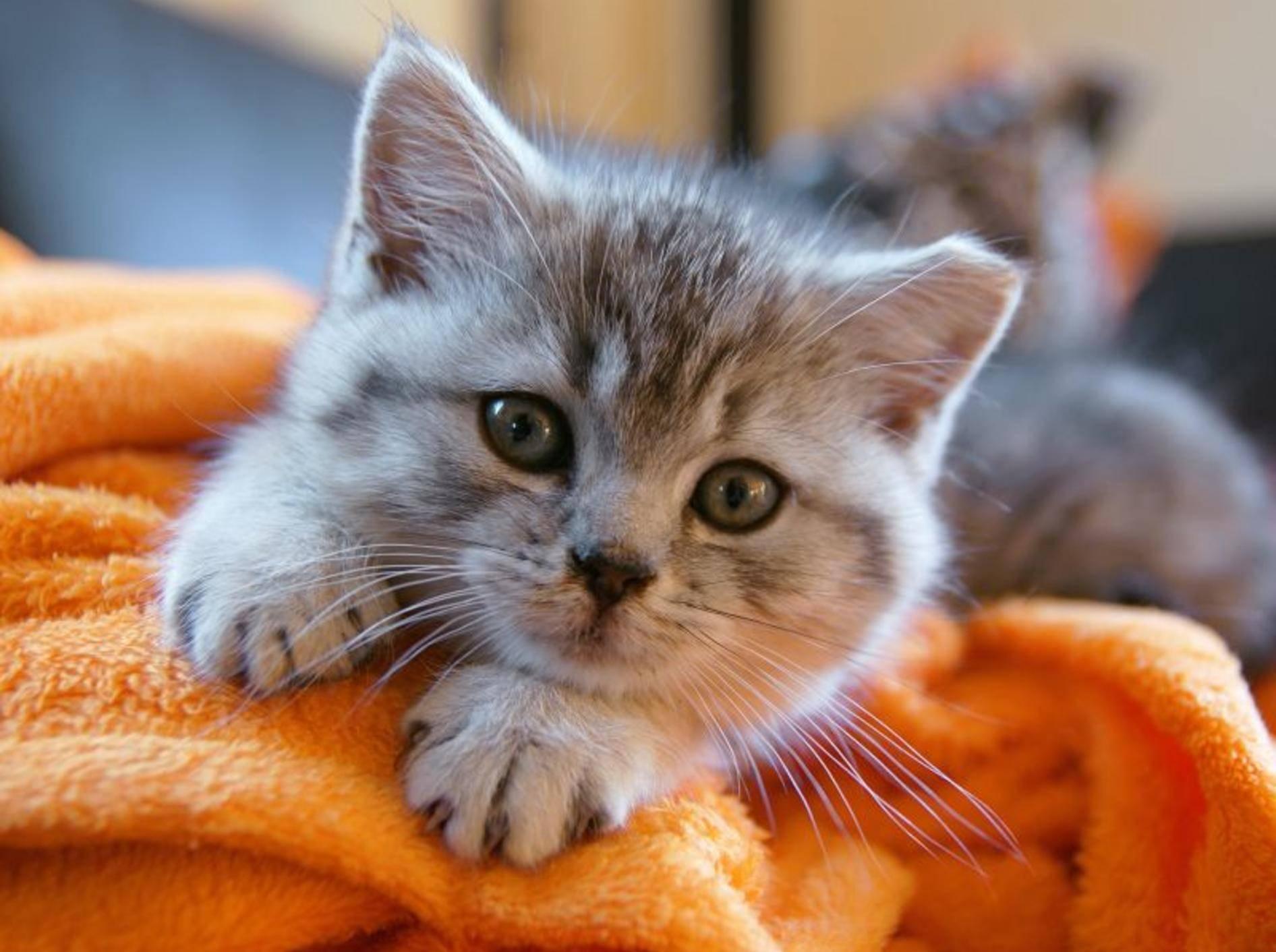 Möbel in XS: Witzige Schlafplätze für Katzen – Bild: Shutterstock / Sushaaa