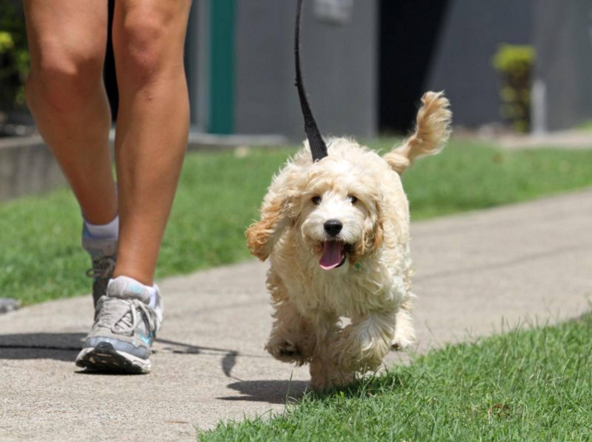 Für die Hundeerziehung braucht es Geduld, Erfahrung und Konsequenz, die sie mit einplanen sollten.