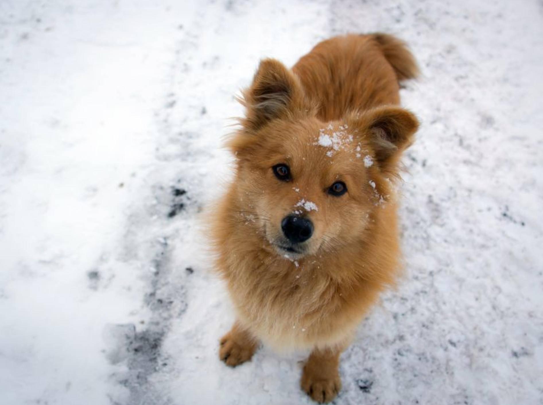 Vier Tipps für die Pfotenpflege bei Schnee und Eis – Bild: Shutterstock / Oleksandr Zhytko