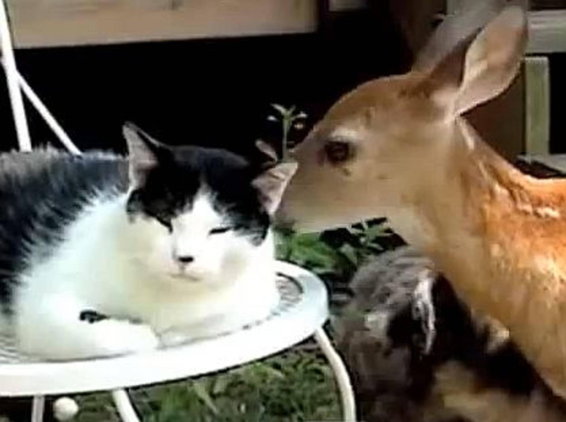 Tolles Team: Diese Tiere sieht man selten zusammen – Bild: Youtube / PetTubedotcom