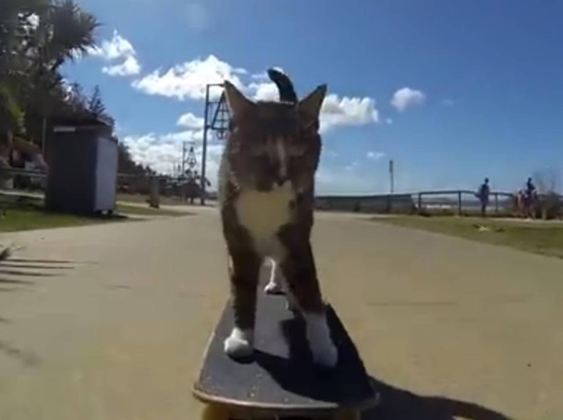 Kater Didga erobert auf seinem Skateboard Australien – Bild: Youtube / CATMANTOO