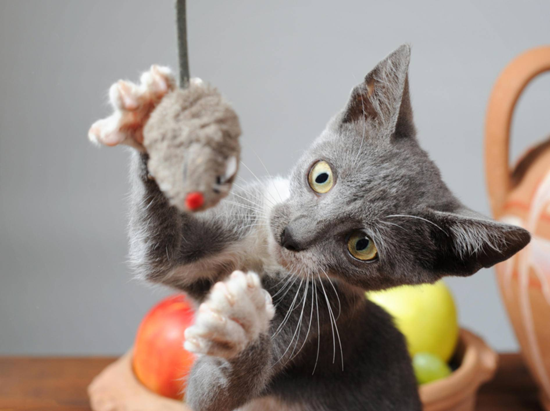 Vier tolle Katzen-Spielzeuge für den Türrahmen – Bild: Shutterstock / dragi52