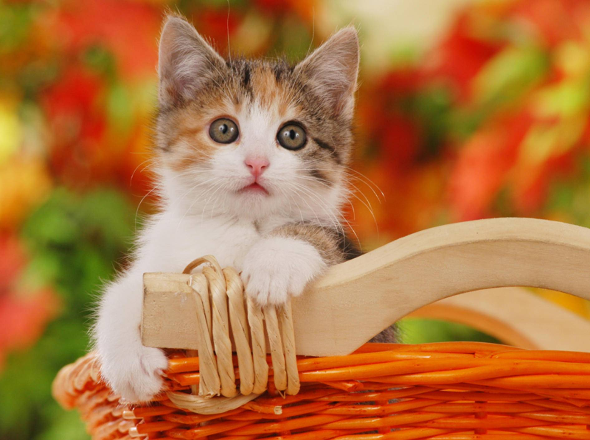 Viele Katzenbabys im Tierheim warten auf ein Herrchen oder Frauchen – Bild: Shutterstock / absolutimages