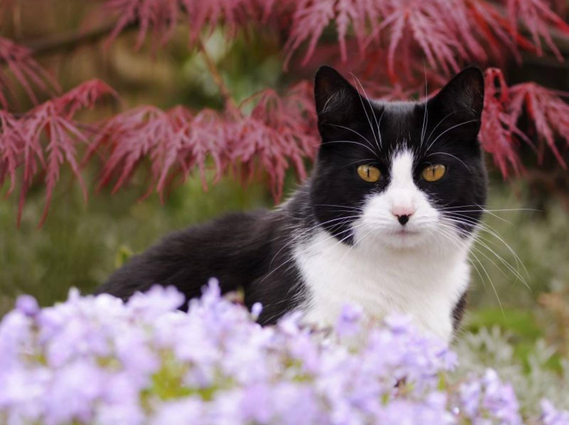Platz 10: Charly ist nicht nur ein süßer, sondern auch ein schöner Katzenname und war 2013 ausgesprochen beliebt – Bild: Shutterstock / Bildagentur Zoonar GmbH