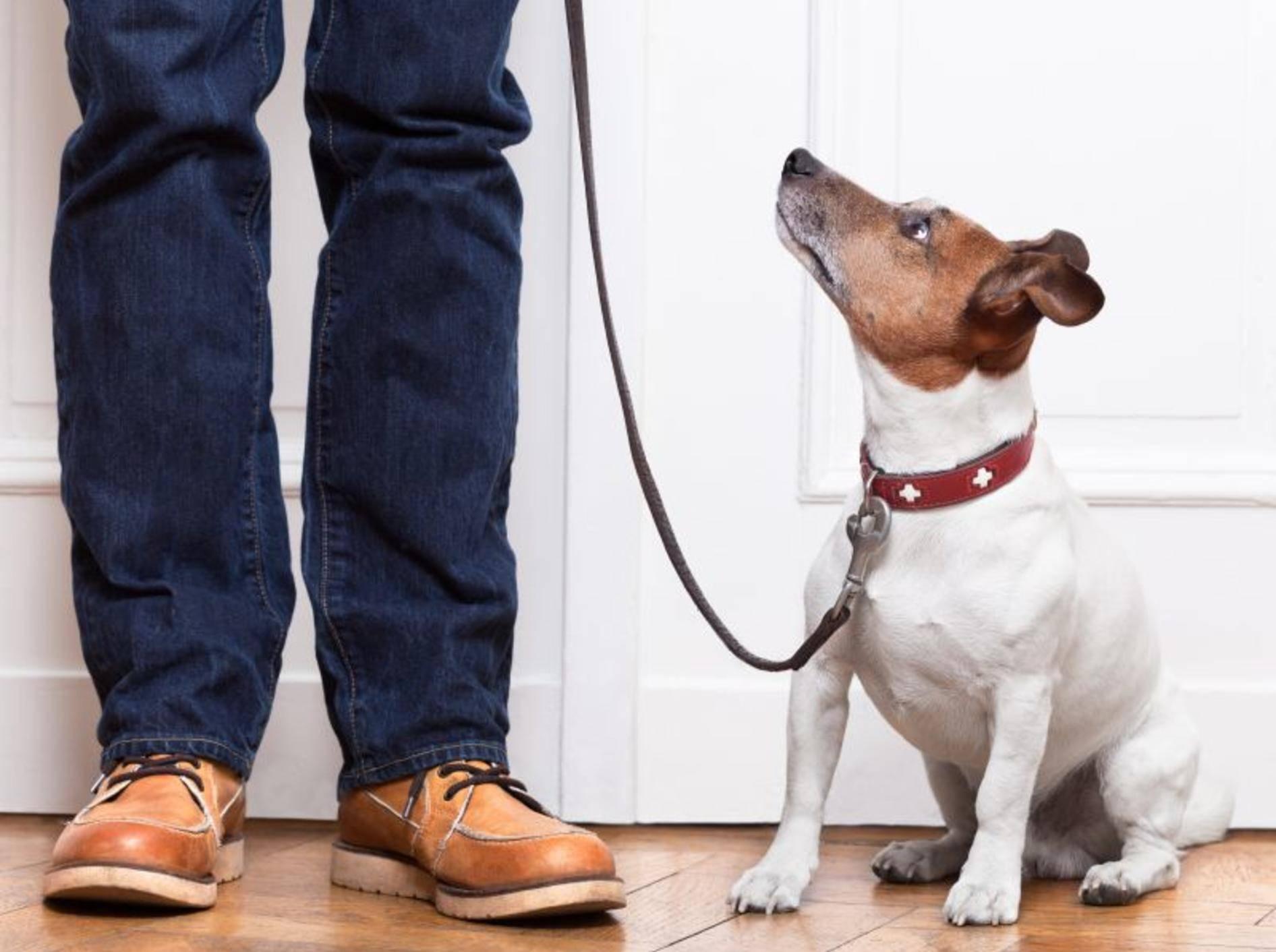 Kleine Hunde erziehen: Ein gesundes Mittelmaß ist wichtig – Bild: Shutterstock / Javier Brosch