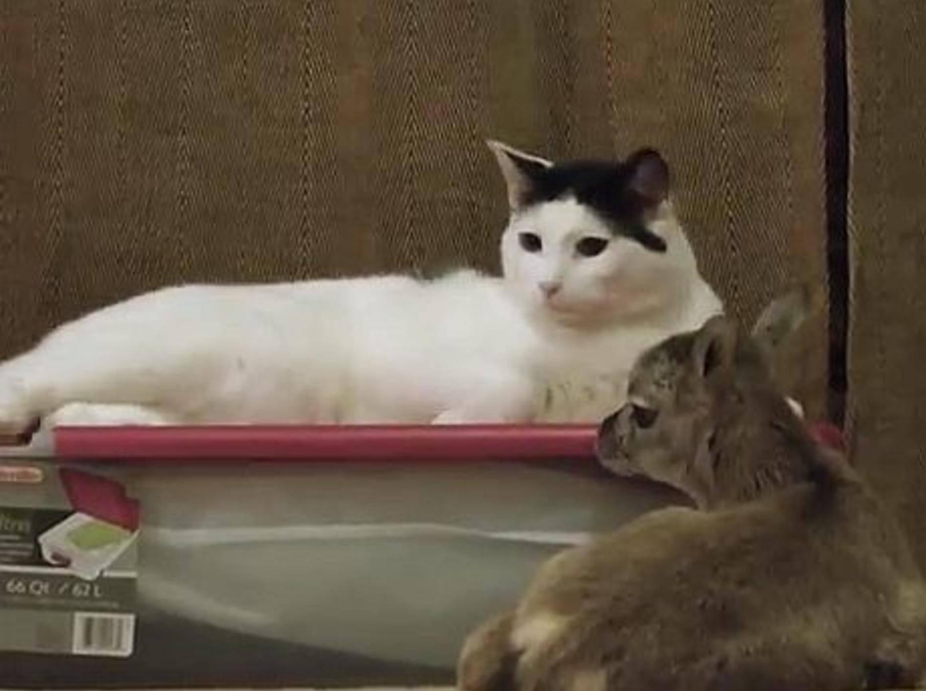 Kater Pancake adoptiert ein Lämmchen – Bild: Youtube / camelsandfriends