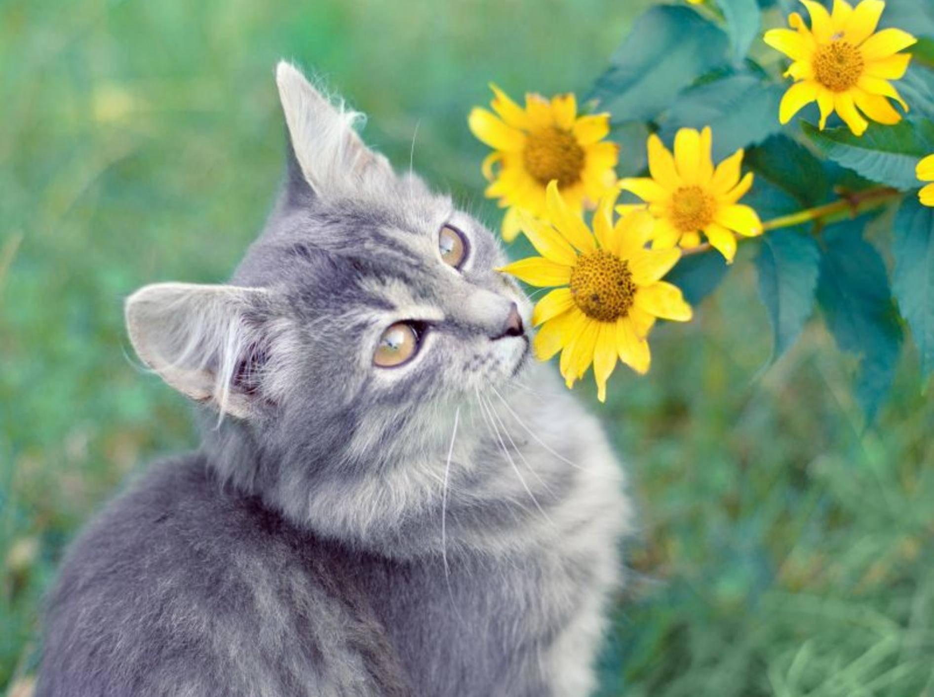 """Platz 10 geht 2013 an den schönen Katzennamen """"Amy"""" – Bild: Shutterstock / vvvita"""