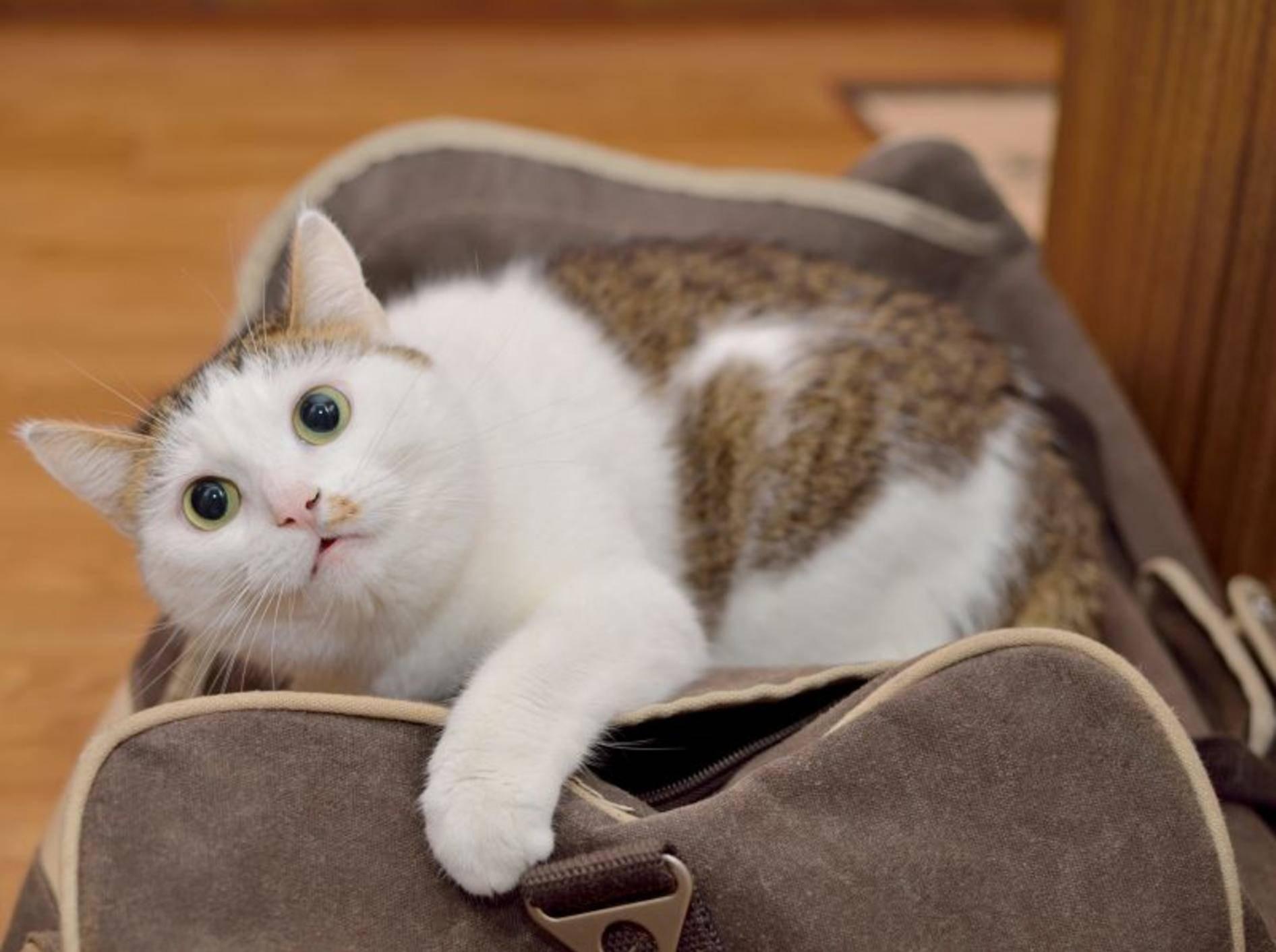 Urlaub mit oder ohne Katze? Eine schwierige Frage – Bild: Shutterstock / Nadinelle