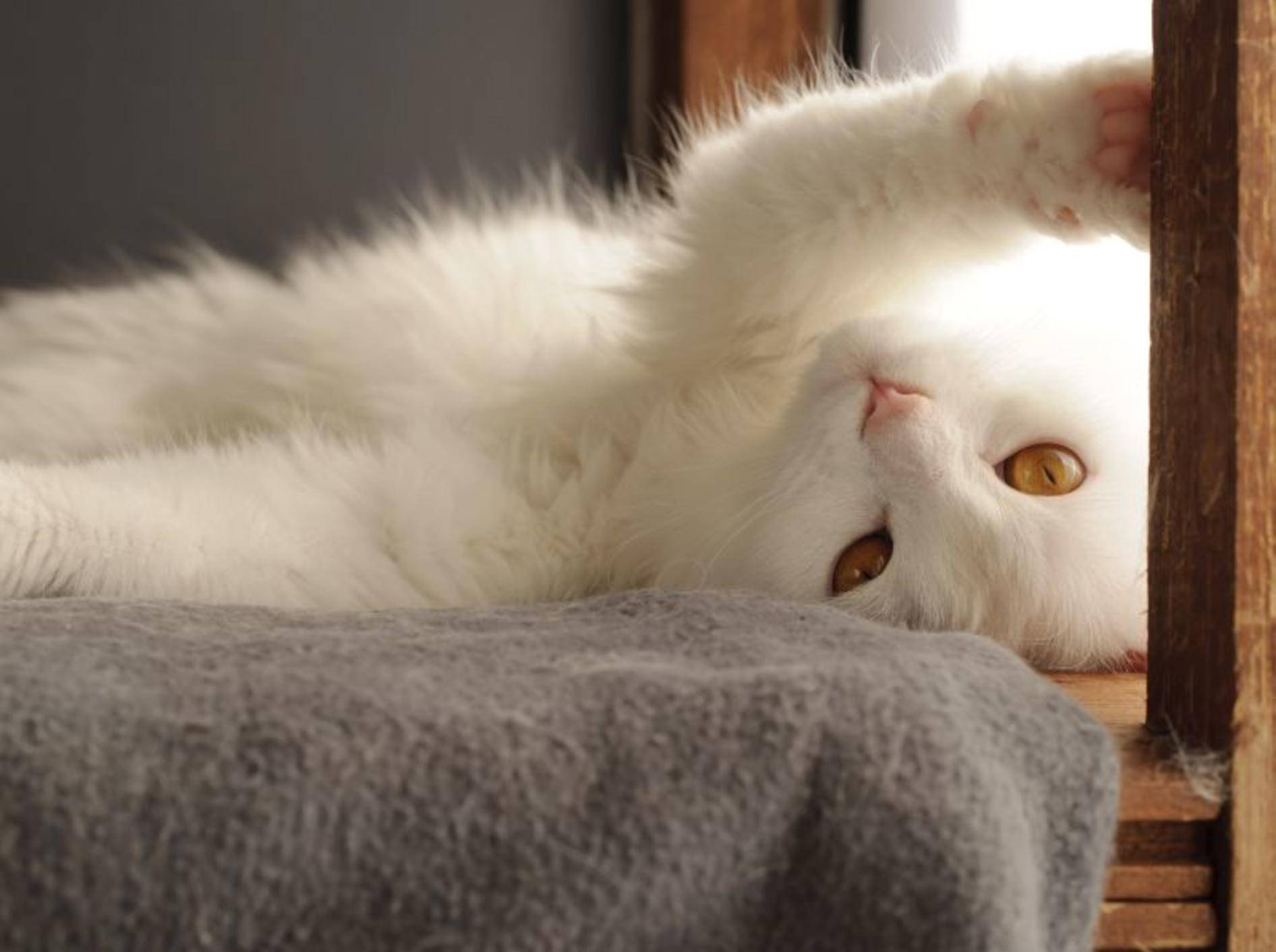 Schnurr, schnurr, schnurr: Wie macht die Katze das eigentlich? – Bild: Shutterstock / Dreambig
