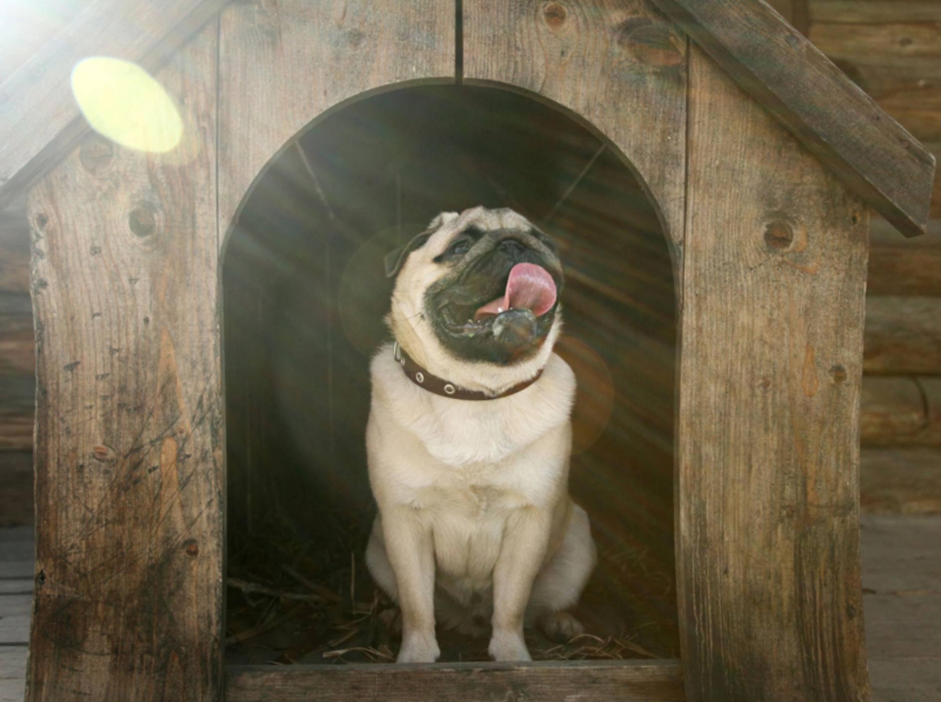 Vier tolle Hundehütten für Ihren Vierbeiner – Bild: Shutterstock / Kichigin